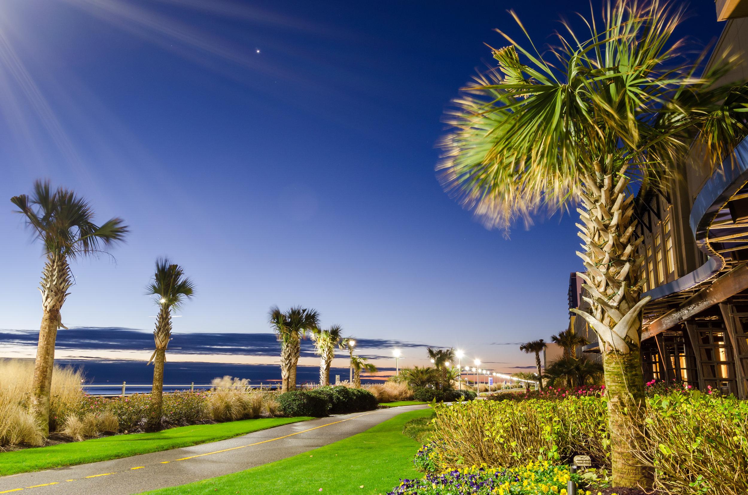 Palm Trees-Virginia Beach-boardwalk-sunrise.jpg