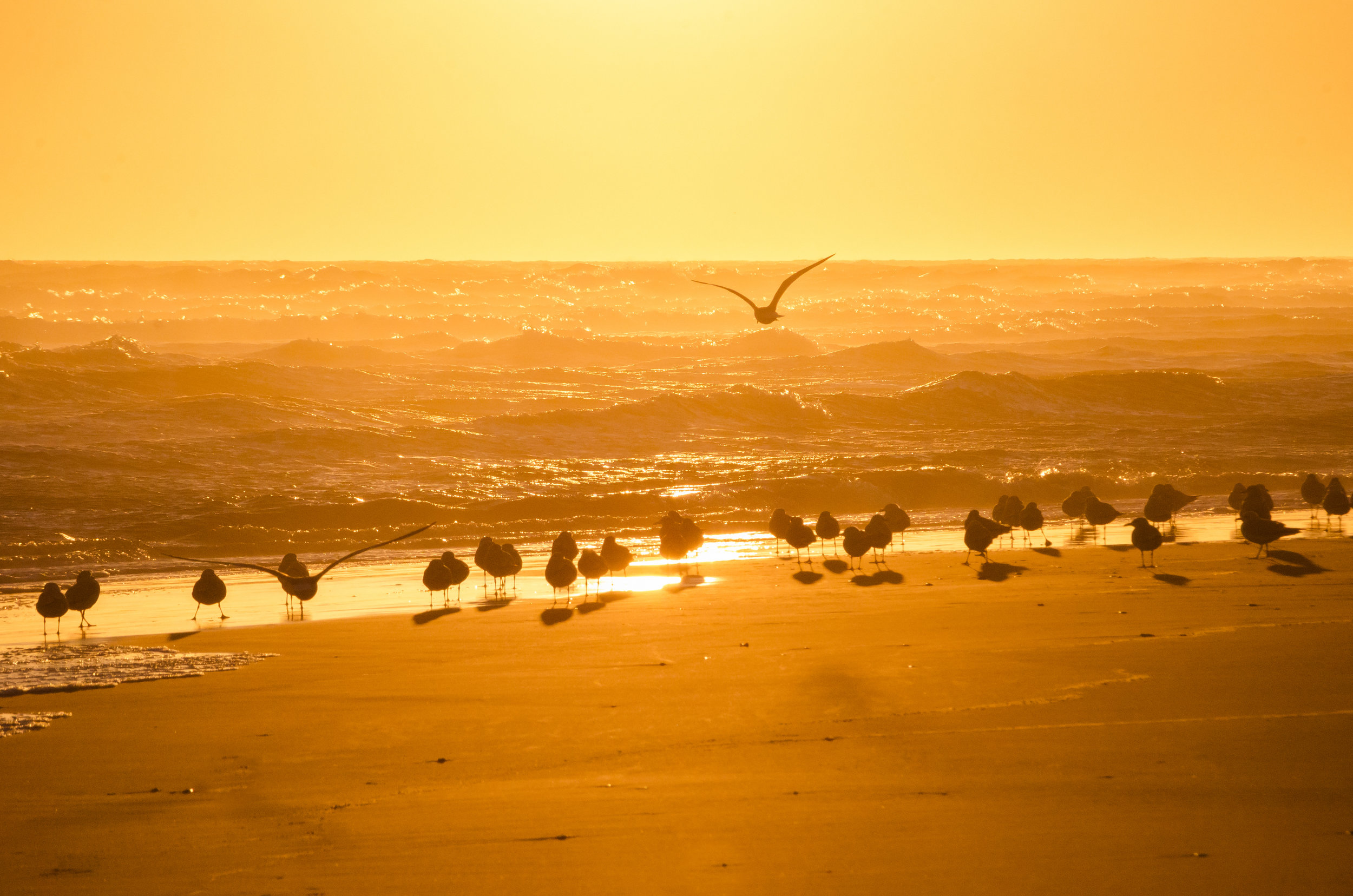 sunset-Frisco-beach-seagulls-orange-Hatteras-Outer Banks-OBX-North Carolina.jpg