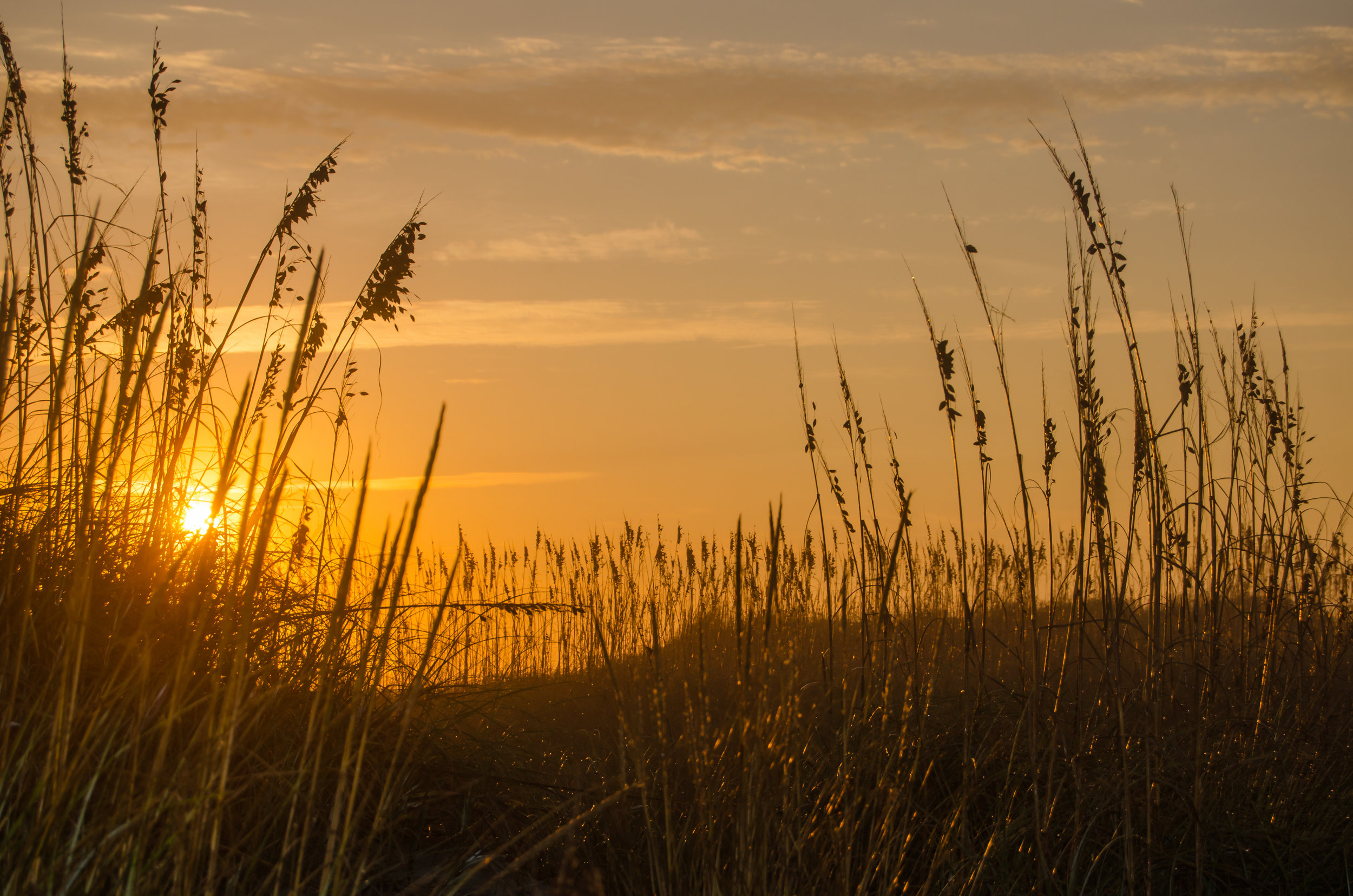 beach-sea oats-sunset-Coquina Beach-Outer Banks-OBX-North Carolina.jpg