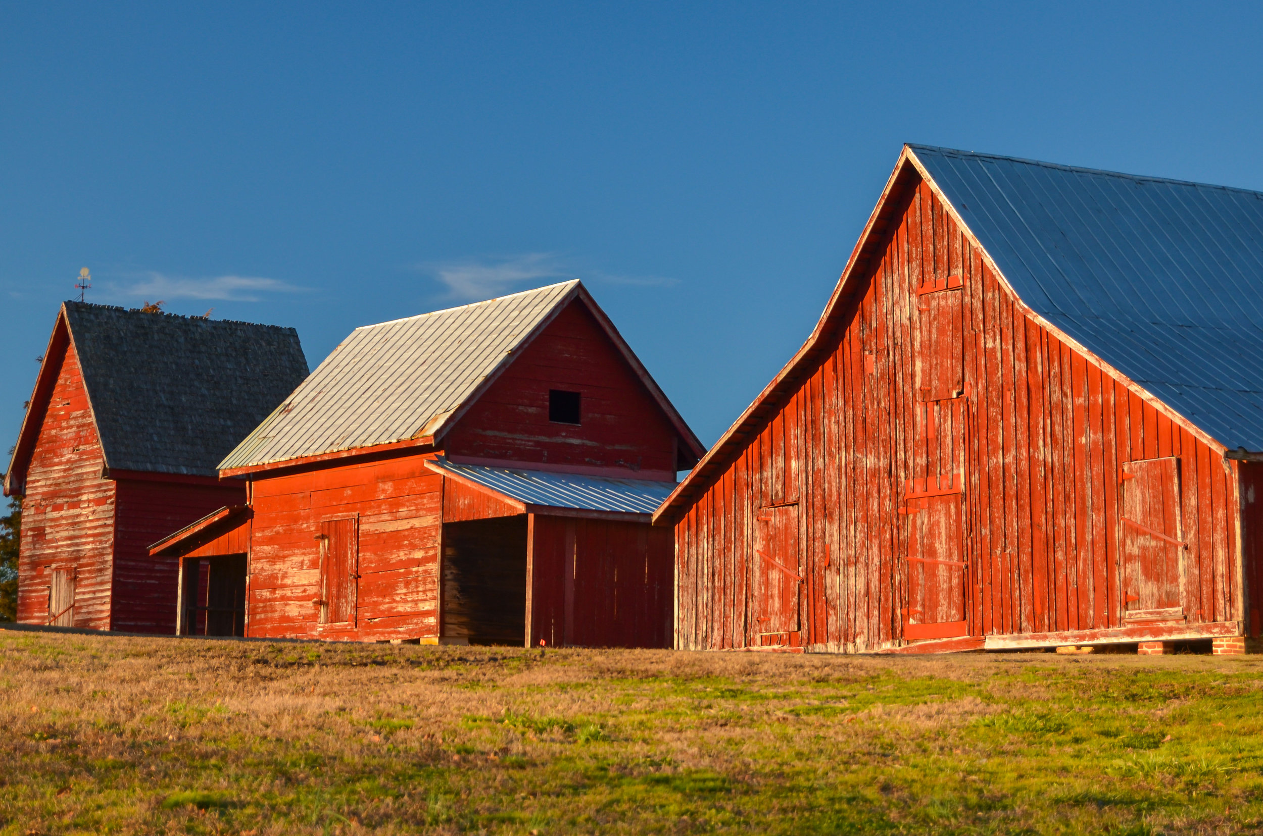 red barns-smithfield-windsor castle park-isle of wight county-virginia-2.jpg