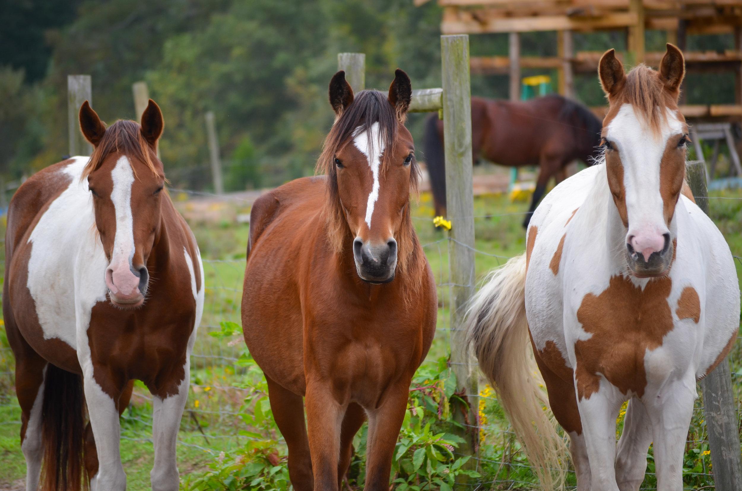 wild horses-smithfield-isle of wight county-virginia.jpg