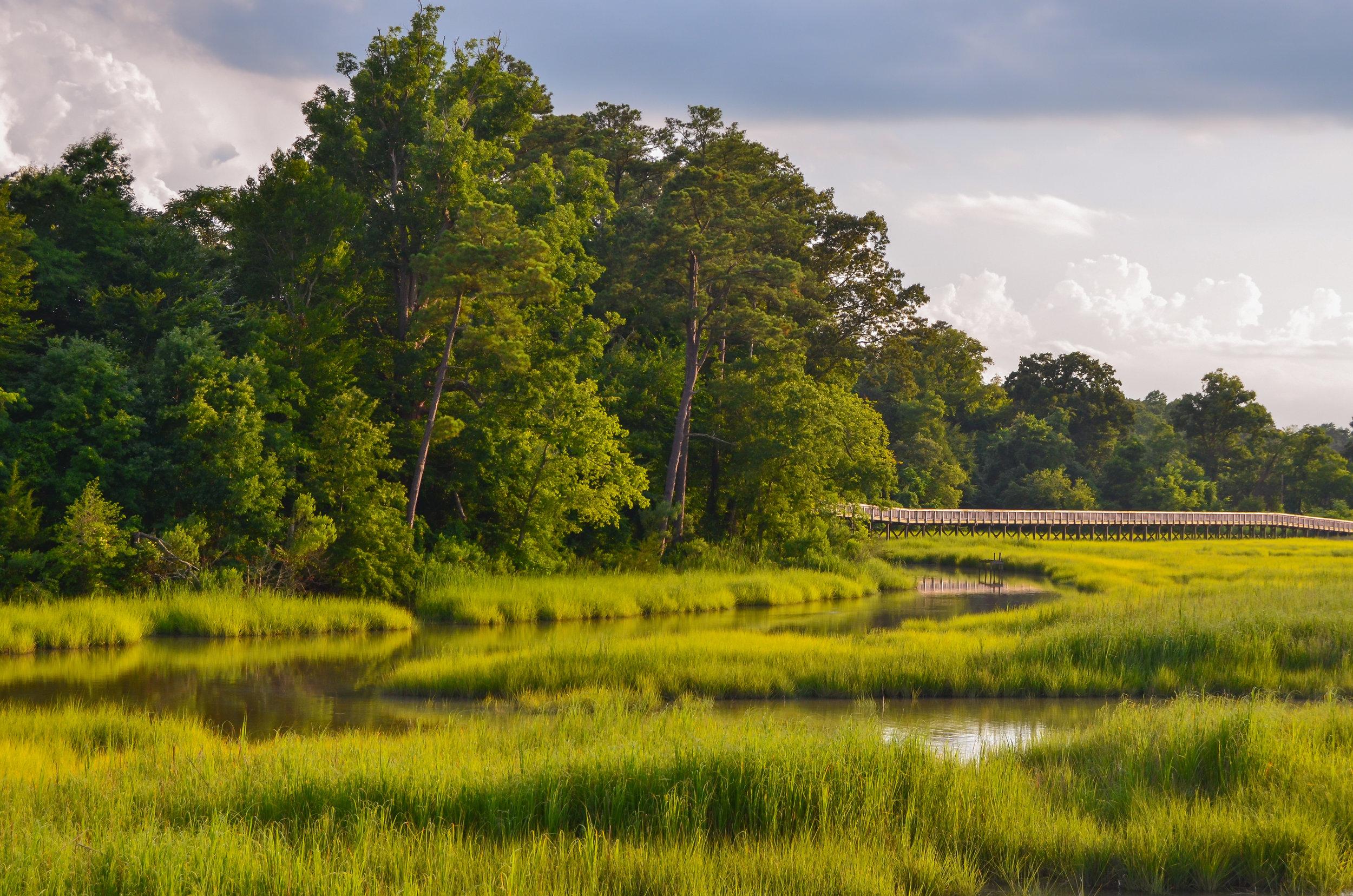 creek-marsh-isle fo wight county-windsor castle park-Smithfield, Virginia.jpg