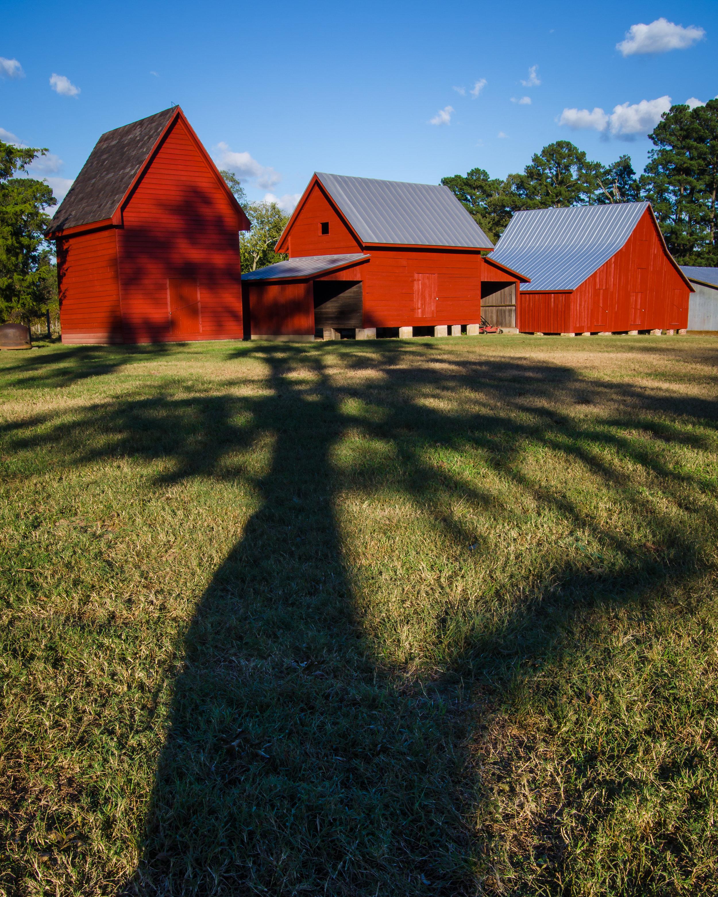 red barns-shadow-smithfield-windsor castle park-isle of wight county-virginia.jpg