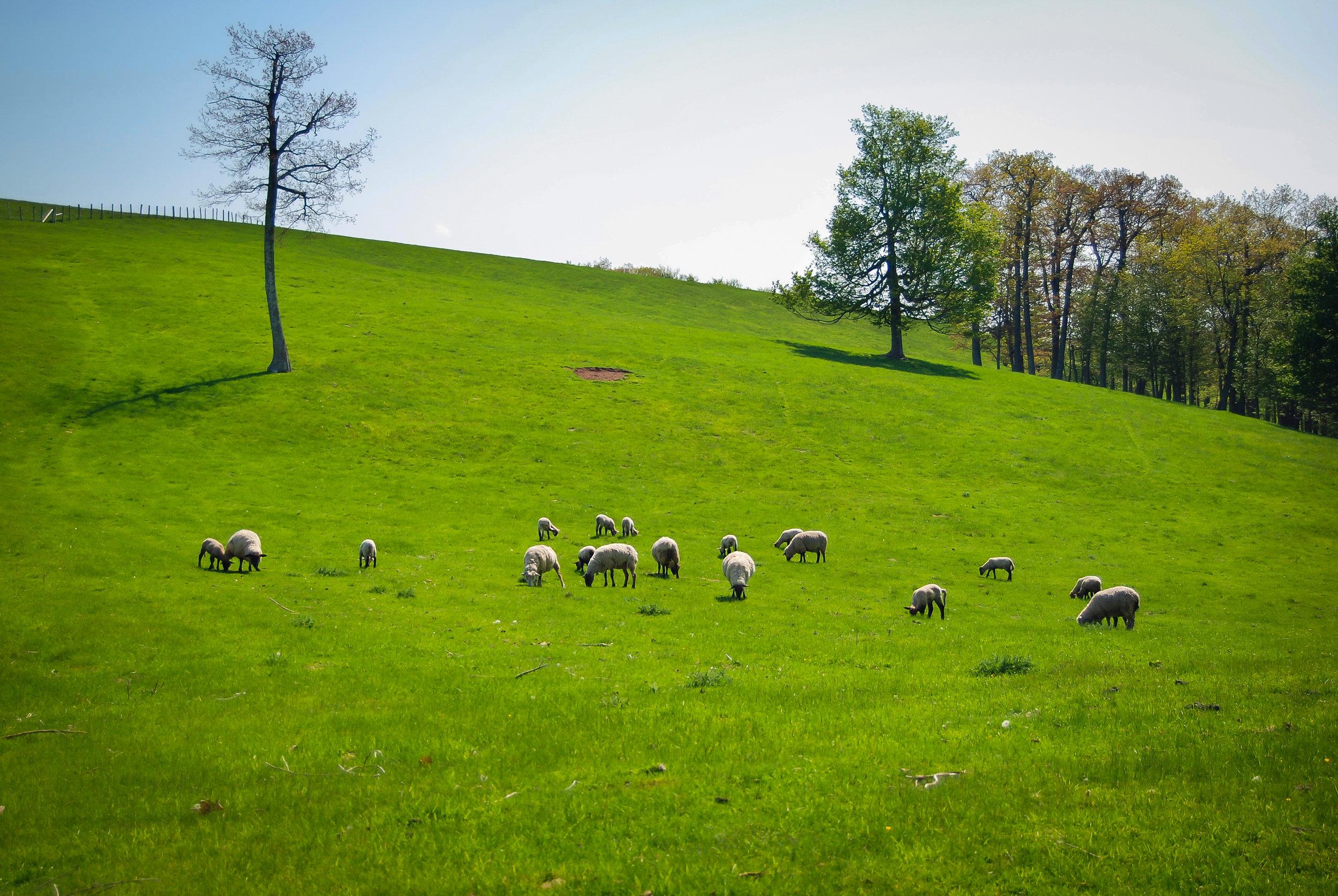 sheep-hill-highland county-virginia.jpg