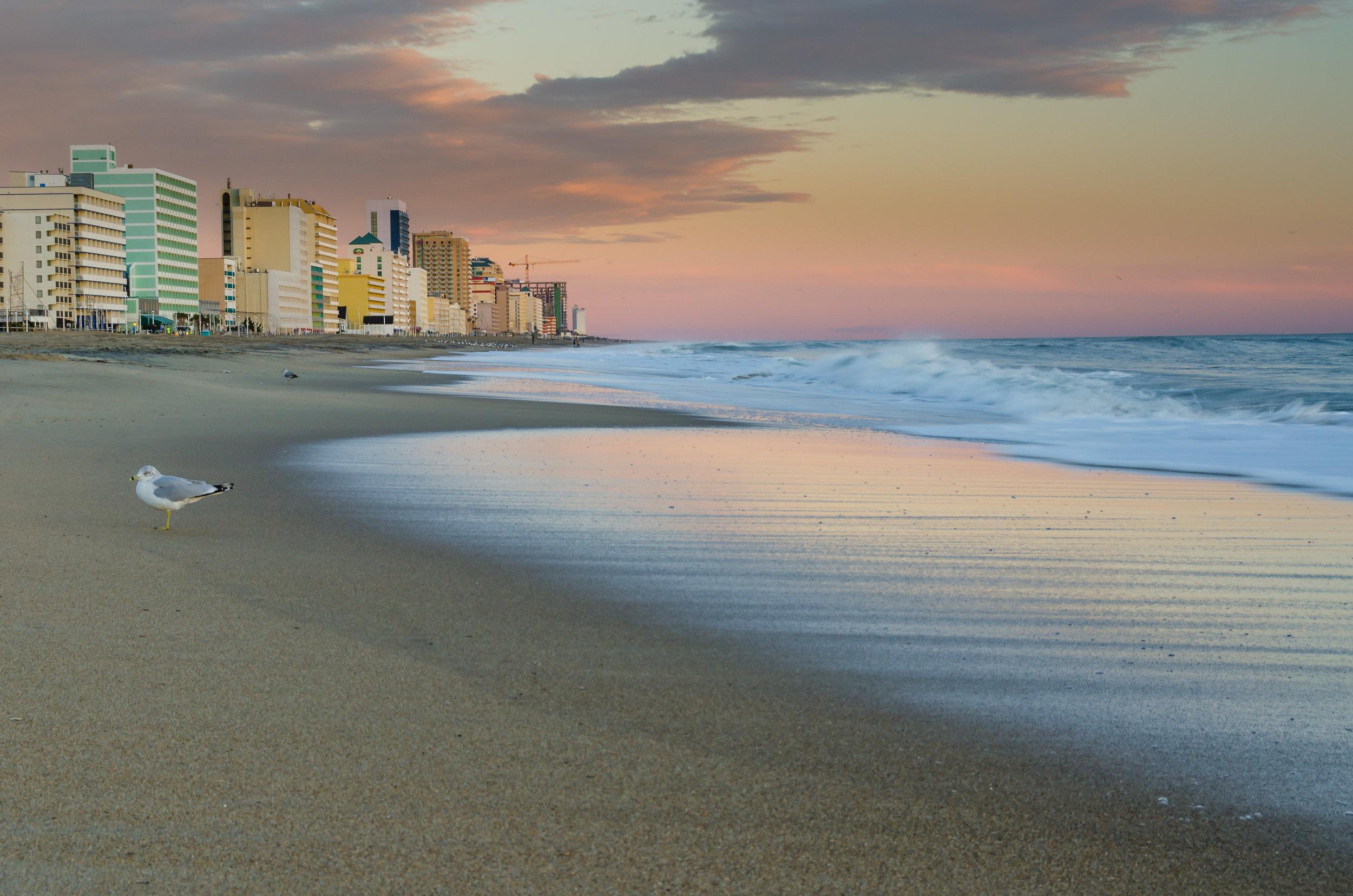Virginia Beach Morning - A seagull enjoys the sunrise at the Virginia Beach Oceanfront in Virginia_.jpg