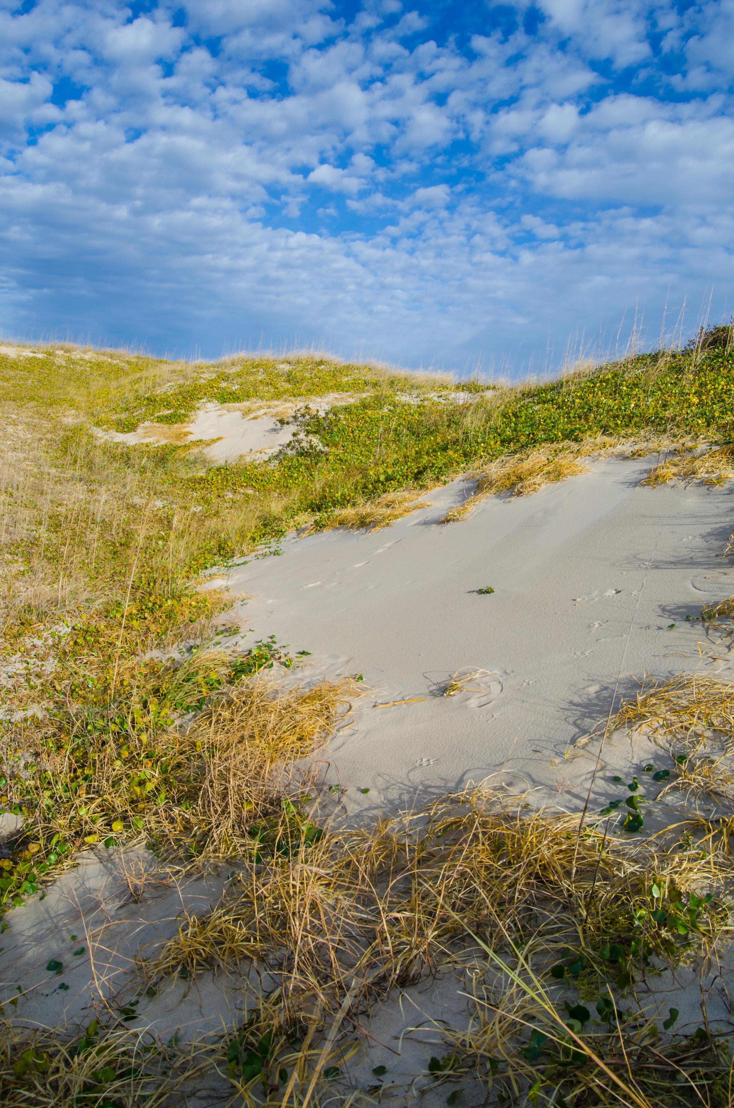 False Cape Colors - Sand dunes against a blue sky at False Cape State Park in Virginia Beach, Virginia_.jpg