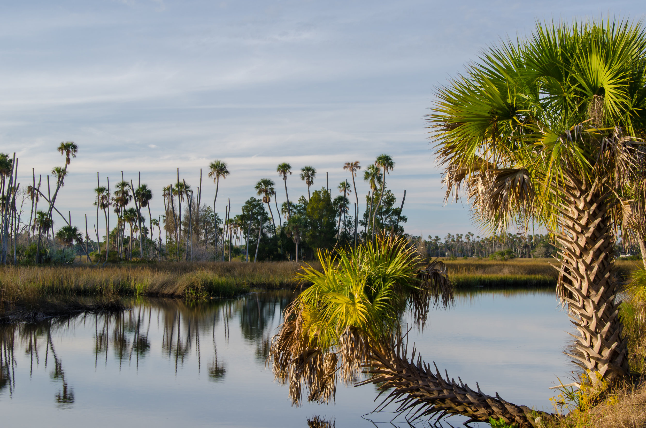 Nature Coast-Crystal River Preserve-Citrus County-palm trees-palms-Florida-tropical.jpg