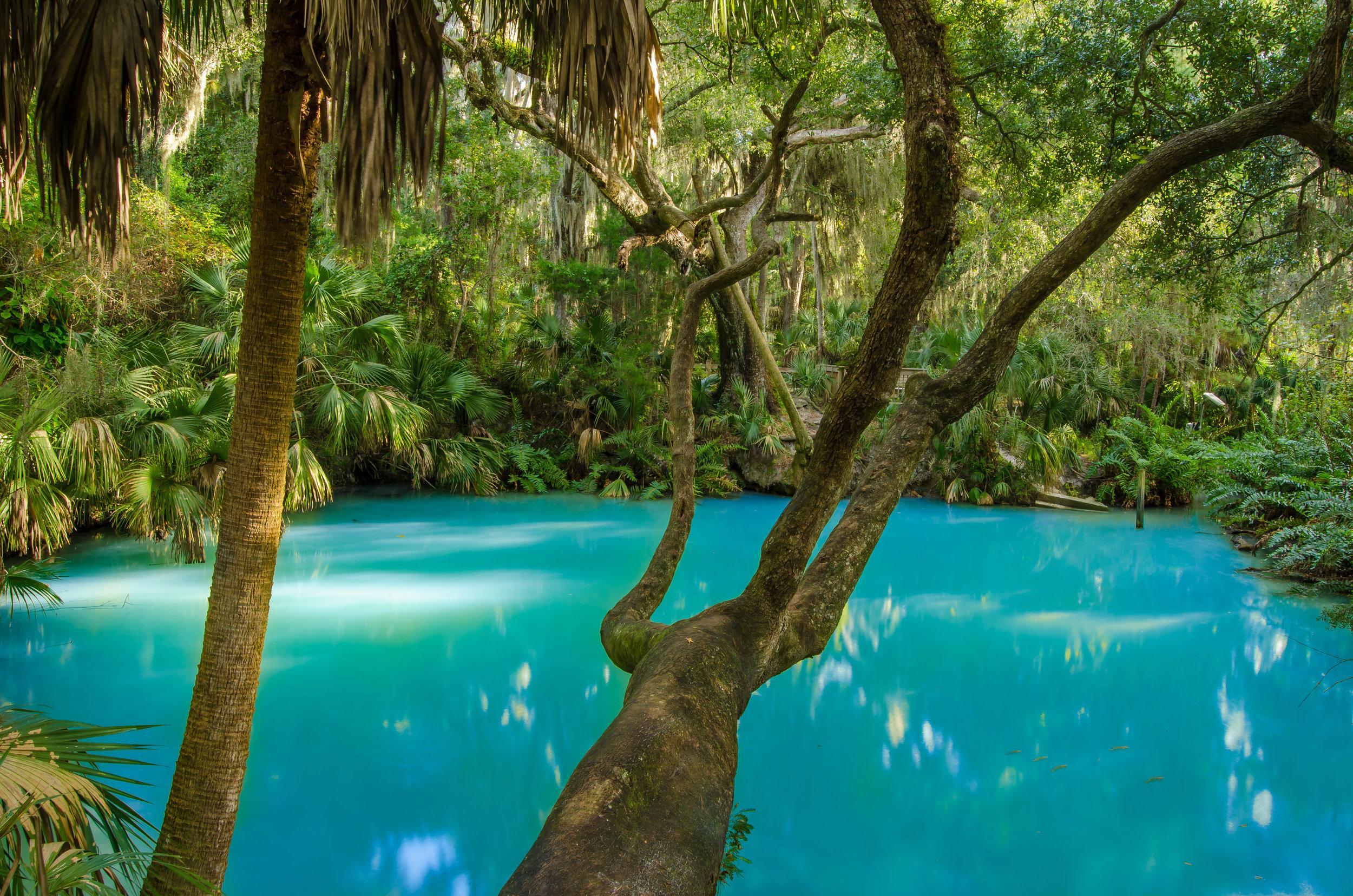 Green Spring-spring-tropical-water-Florida-Volusia County.jpg
