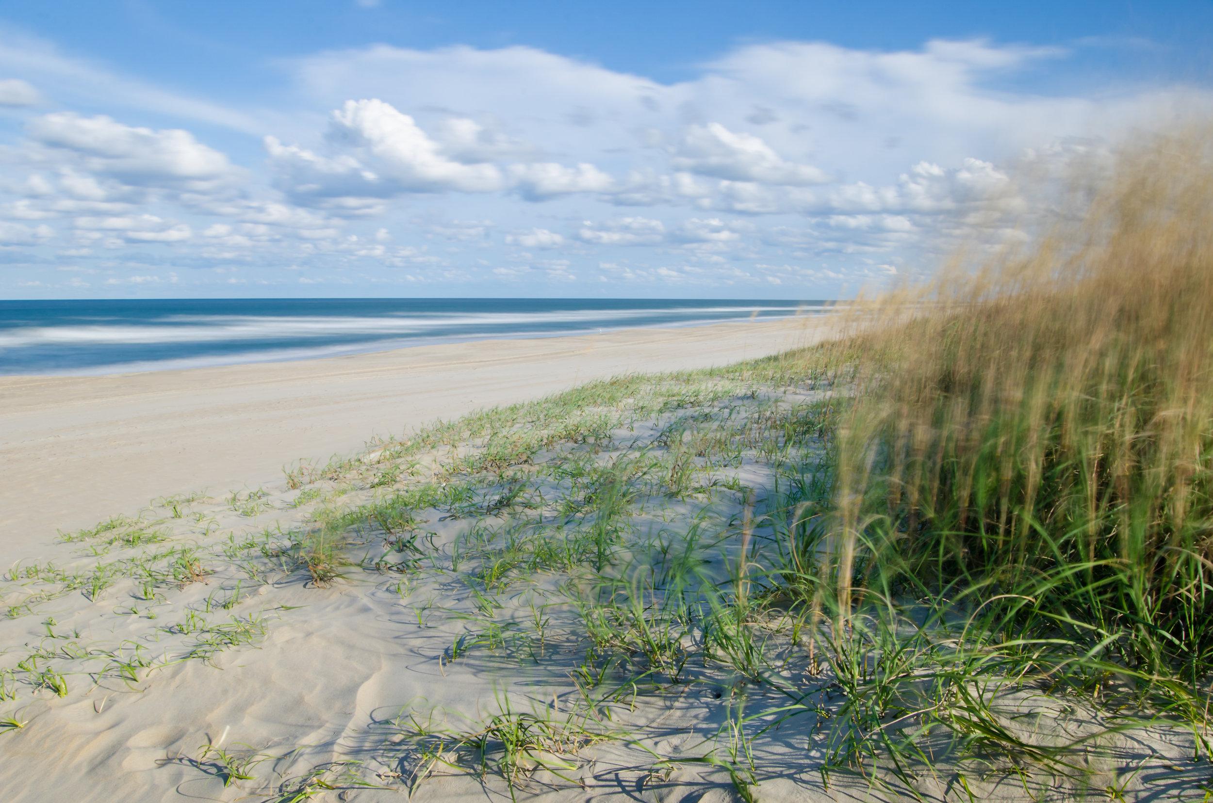 false cape-virginia beach-virginia-beach-sea oats.jpg