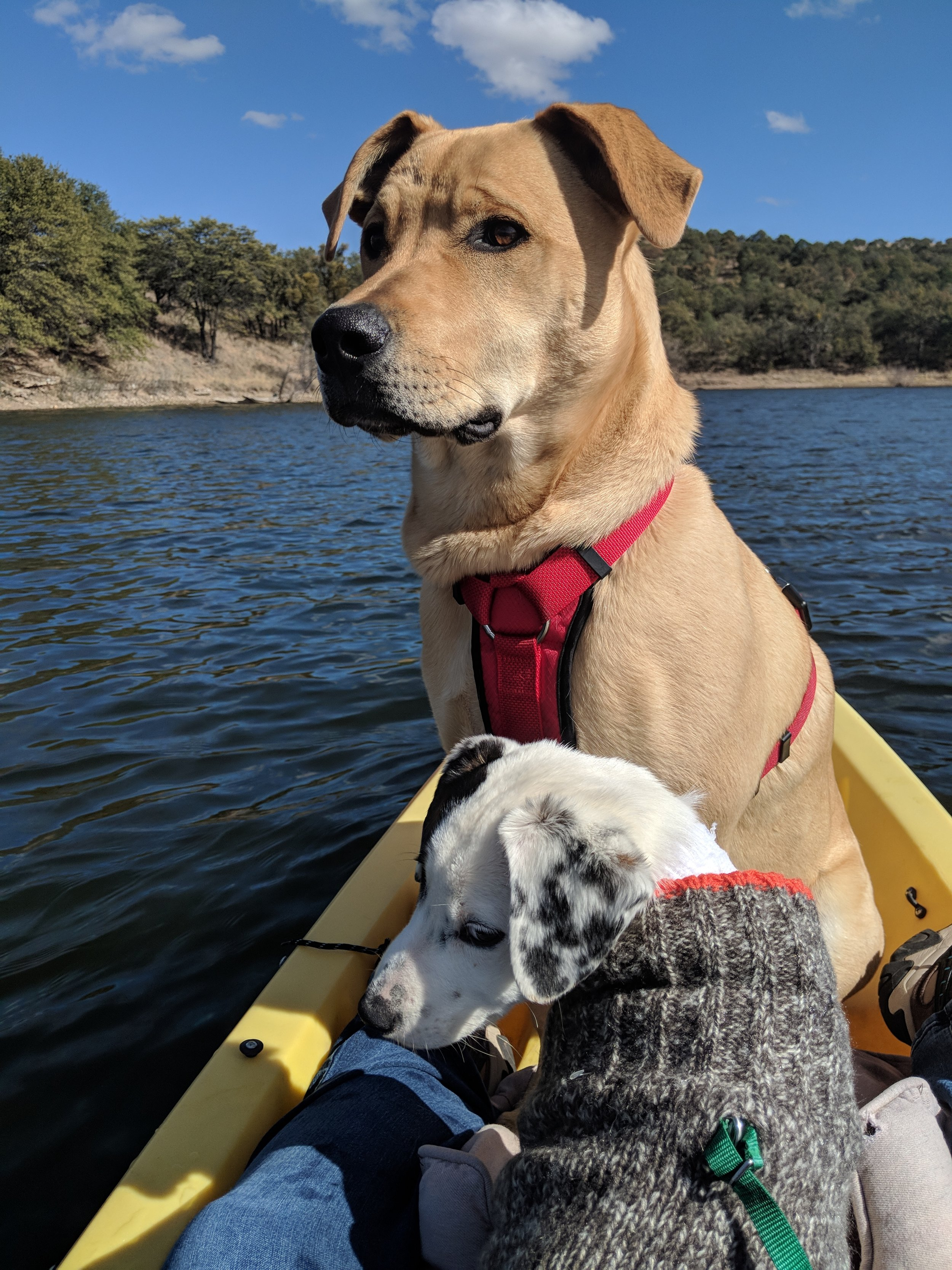 Henry and Georgie kayaking.jpg