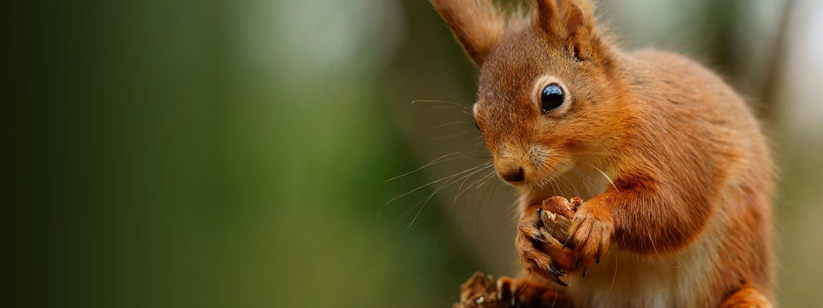 squirrel-2-1.jpg