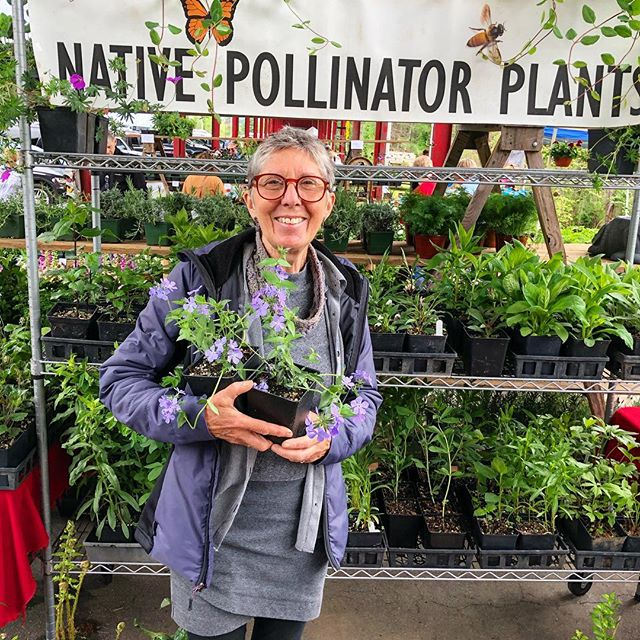 Happy Saturday Asheville! ⛰ It's the second and final day of the @growing.in.the.mountains plant sale! Come join us! 🌱 We'll be here 9-5PM, rain or shine (though the forecast calls for all shine!), at the WNC Farmers Market ☀️ . . 📸Pictured is Diane of Big Pine Natives, showing us her native pollinator plants. 🐝🦋 . . #garden #gardening #gardener #pollinator #pollinatorgarden #pollinators #homesteading #homestead #growyourfood #medicinalplants #medicinalherbs #herbgarden #plantsale #plantsales #savethebees #pollinatorawareness #asheville #ashevillenc #828isgreat #raisedgardenbeds #greenthumb #greenthumbs #greenthumbsup #eatlocal #shoplocal