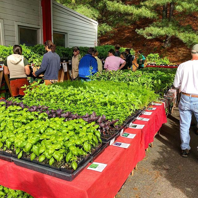 And that's a wrap for 2019! 🎉 Thank you to everyone who came out and made it another great year for @growing.in.the.mountains ! We love seeing you and wish you a wonderful growing season. Happy gardening! 🌱🍅🍓 . . 📸 Photo is of the Red Wing Farm booth . .  #828isgreat #asheville #ashevillenc #wnc #appalachia #growinginthemountains #growyourown #growyourownfood #veggies #flowers #plants #plantsofig #plantsale #plantsales #greenery #local #garden #gardening #gardendesign #landscapedesign #medicinalherbs #medicinalplants #herbs
