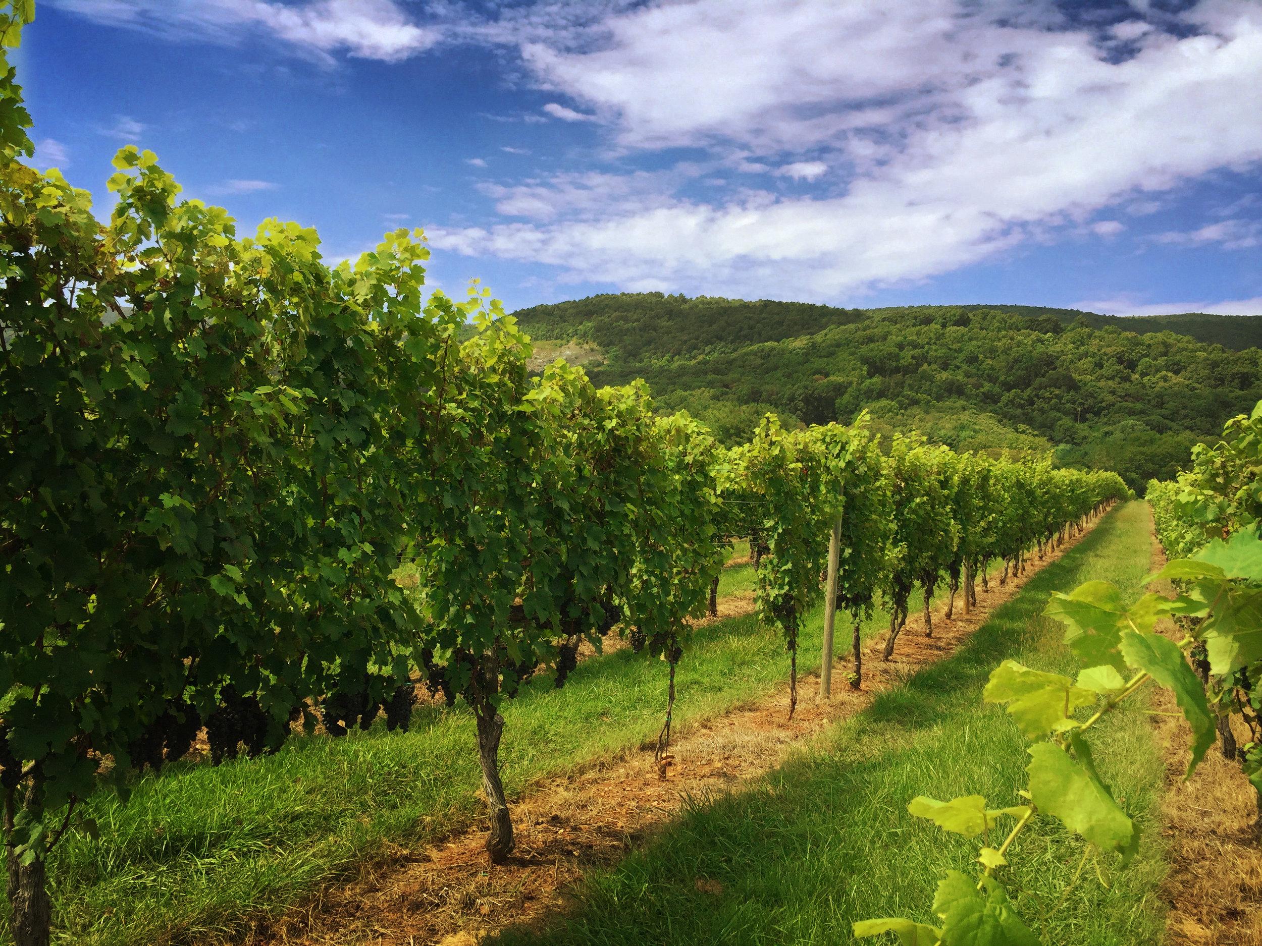 Charlottesville Virginia Wine Tour