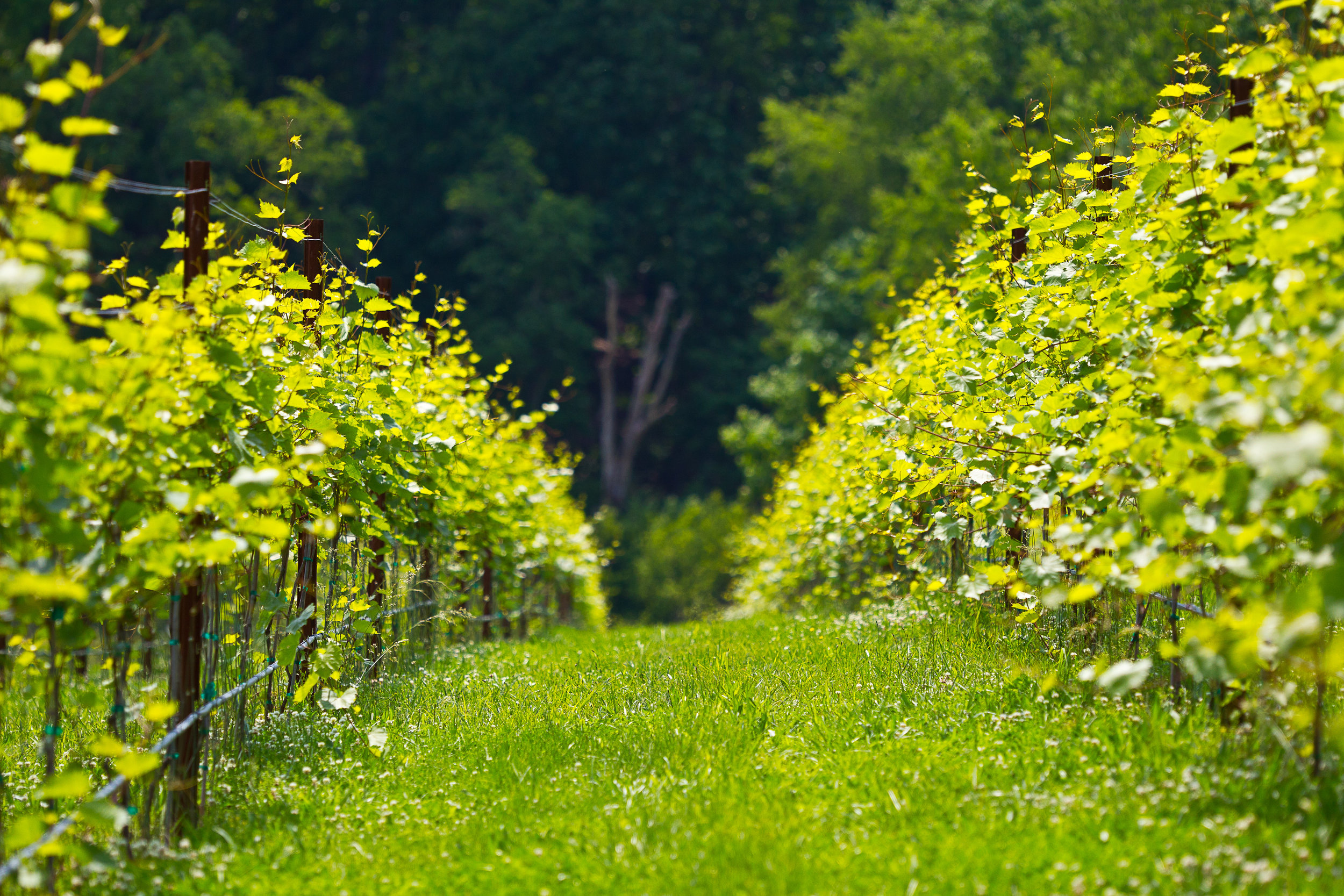 SOUTH - Features New Favorites: Thatch Winery, Blenheim Vineyards, Trump Vineyards, Keswick Vineyards