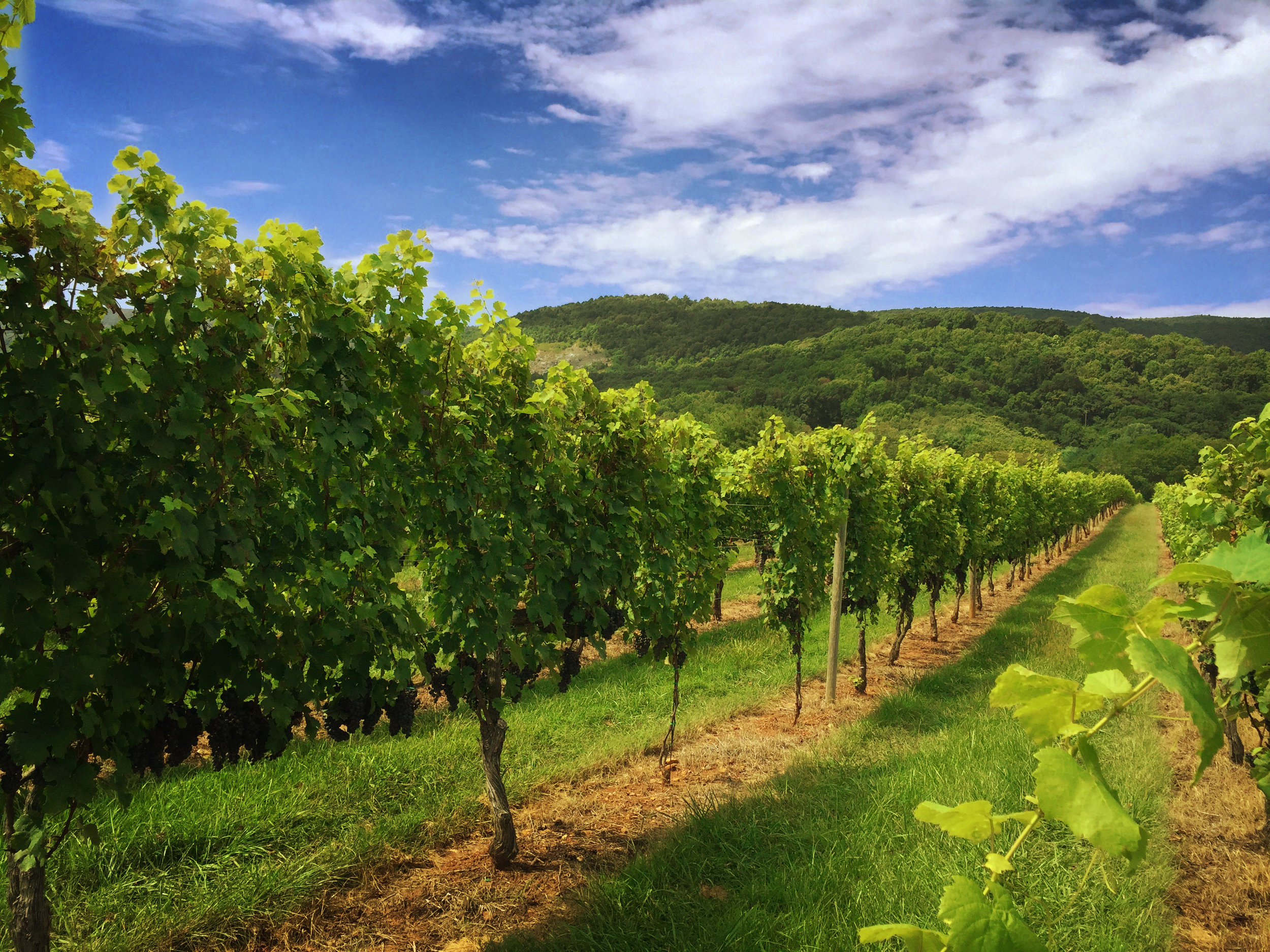 West - Features: King Family Vineyards, Veritas Vineyards & Winery, Stinson Vineyards, Pollak Vineyards, and Grace Estate Winery