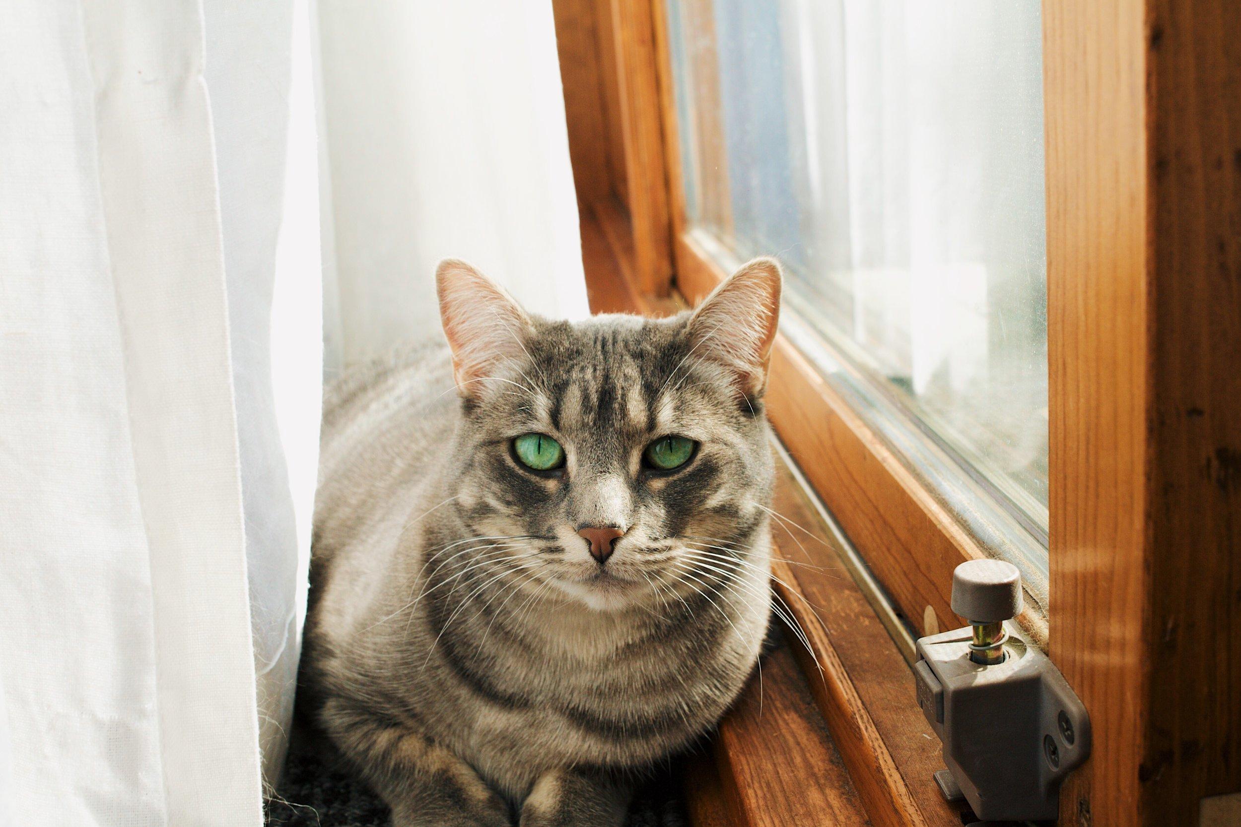 Jade's cat Calliope