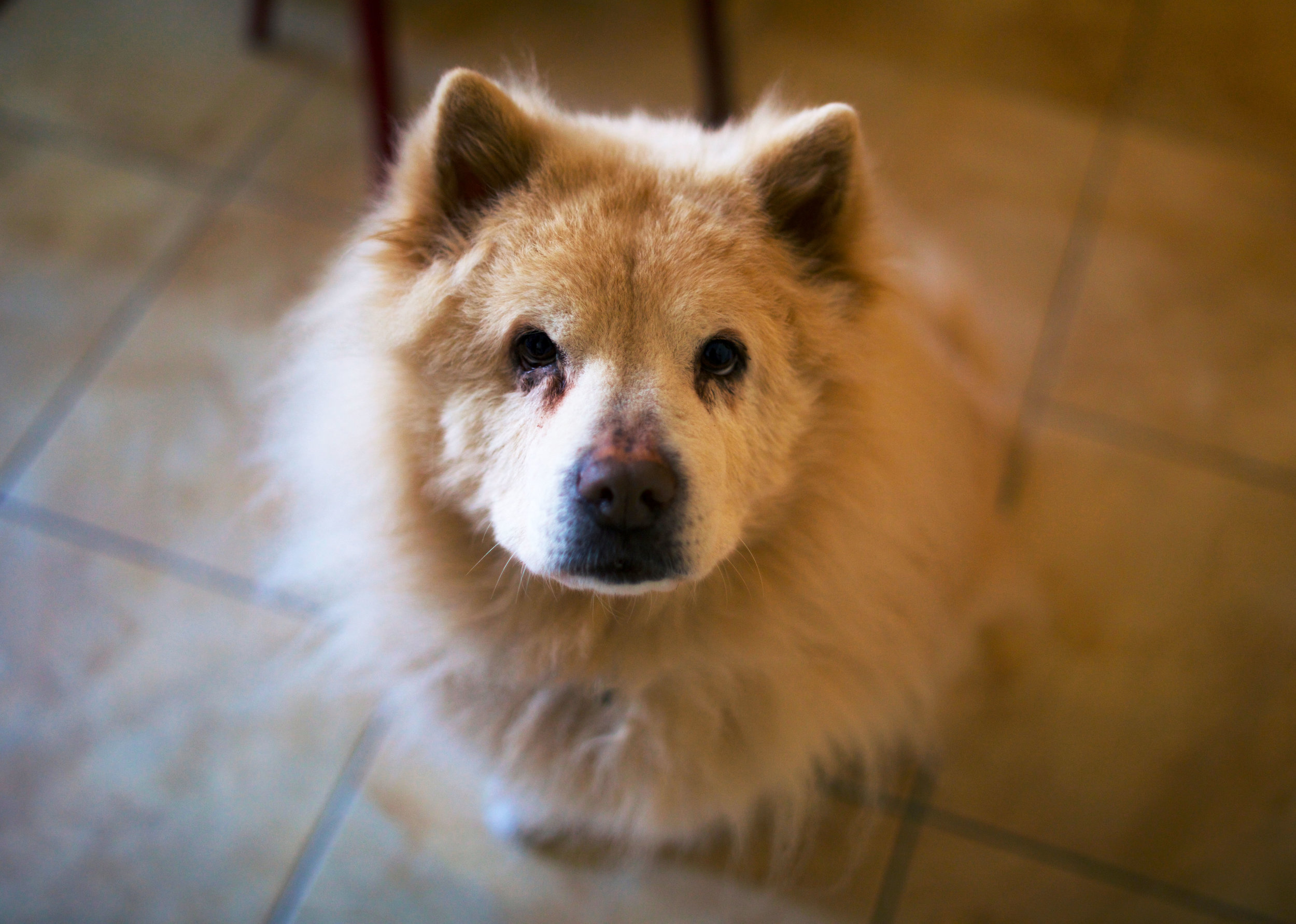Savita's dog Cookie