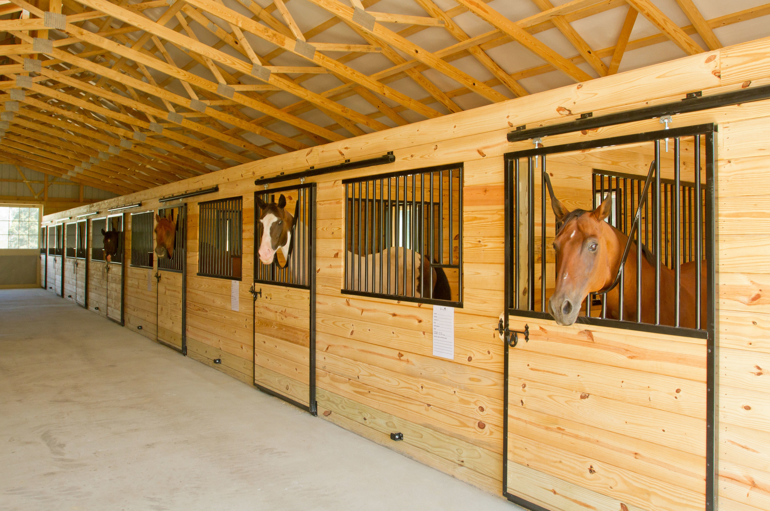 Westbrook Horse Farm - Brian Westbrook founded the Westbrook Horse Farm as a boarding facility which ran for 11 years and is now in the process of transitioning to the home for the Brian Westbrook Foundation.