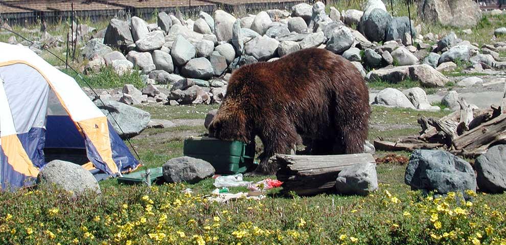 BearAwarenessMain.jpg