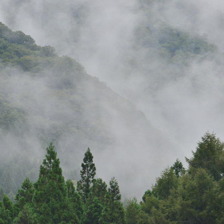 LABYRINTH2016-95 mist.jpg