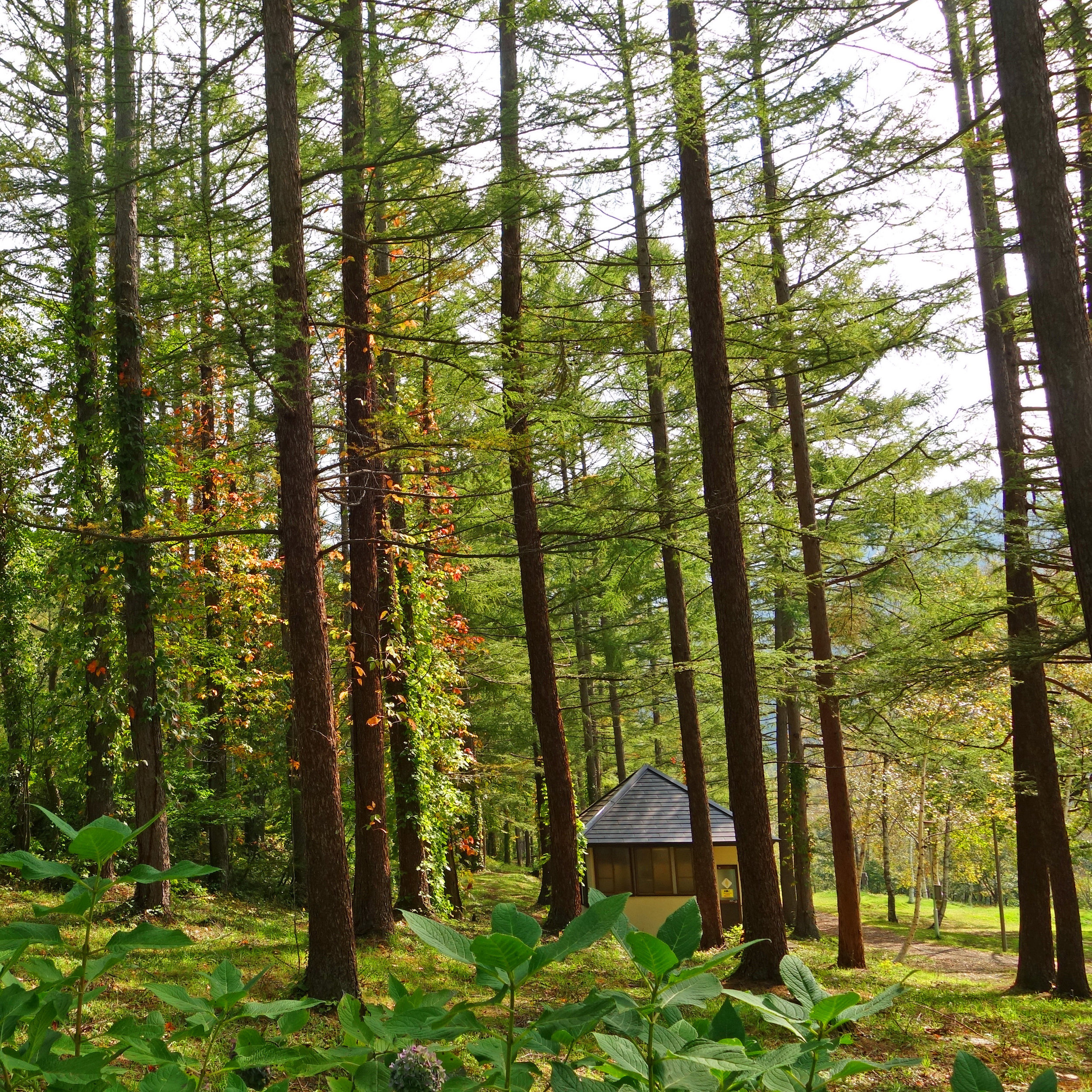 forest camping square.jpg