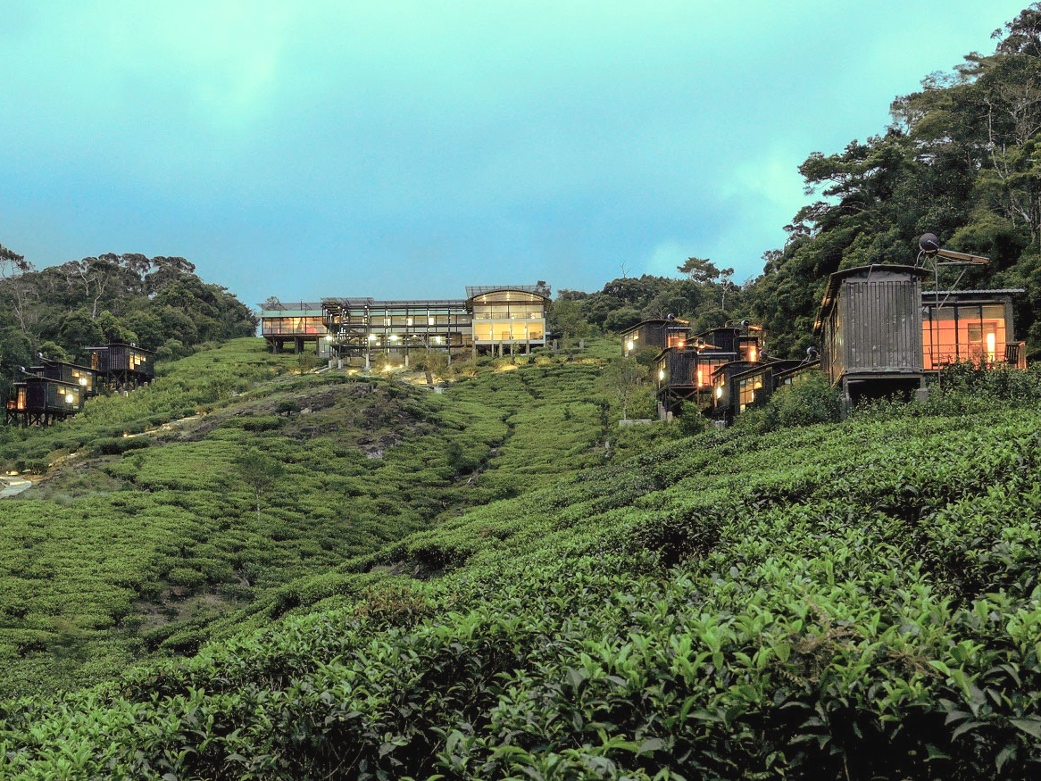 Sri Lanka's rainforests and endemic birds on tailor made bird watching holidays