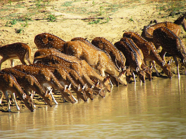 Safaris with Ayu in the Wild on customized wildlife holidays to Sri Lanka
