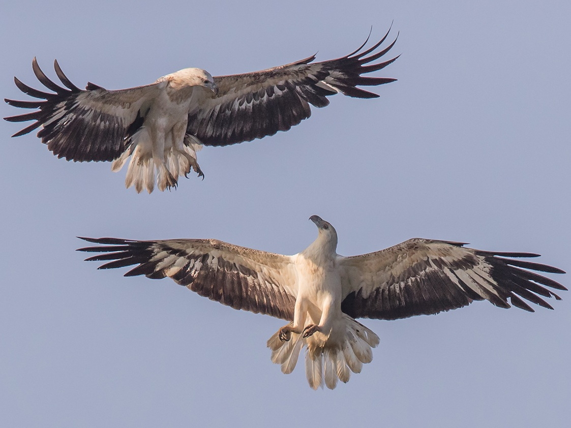 Eagles seen during Sri Lanka's best bird watching season with experienced naturalists