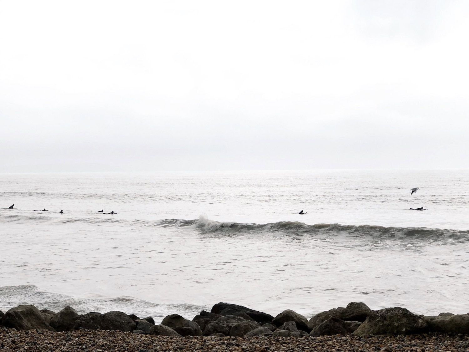 3-surfers-and-seagulls
