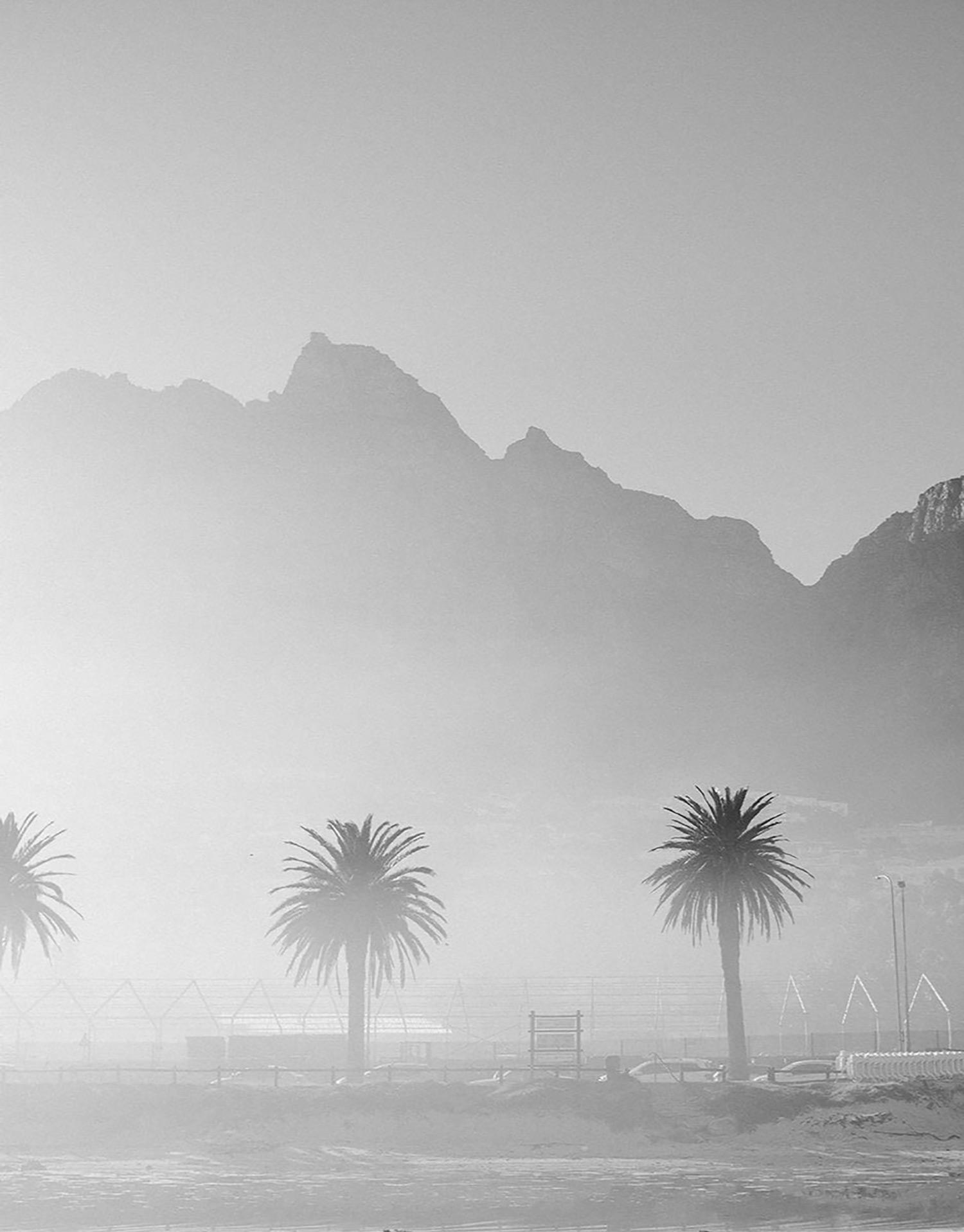2-beach-palm-trees-in-the-mist.jpg