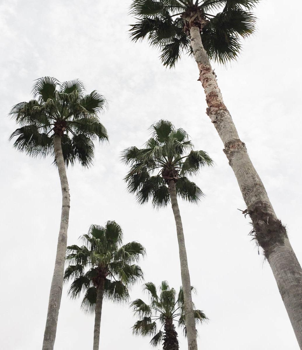 3-upward-view-tall-palm-trees.jpg