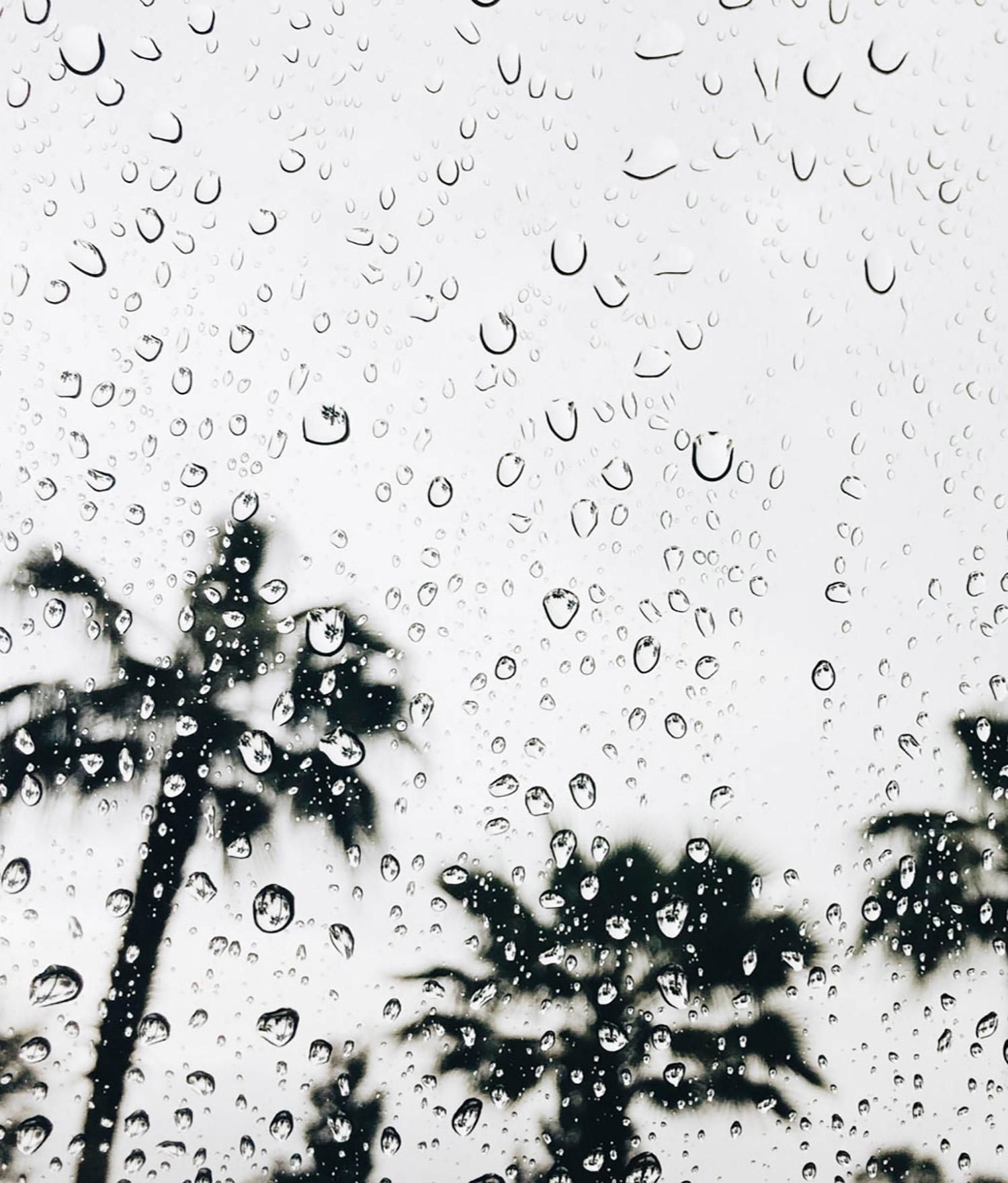 5-palm-trees-through-rainy-window.jpg