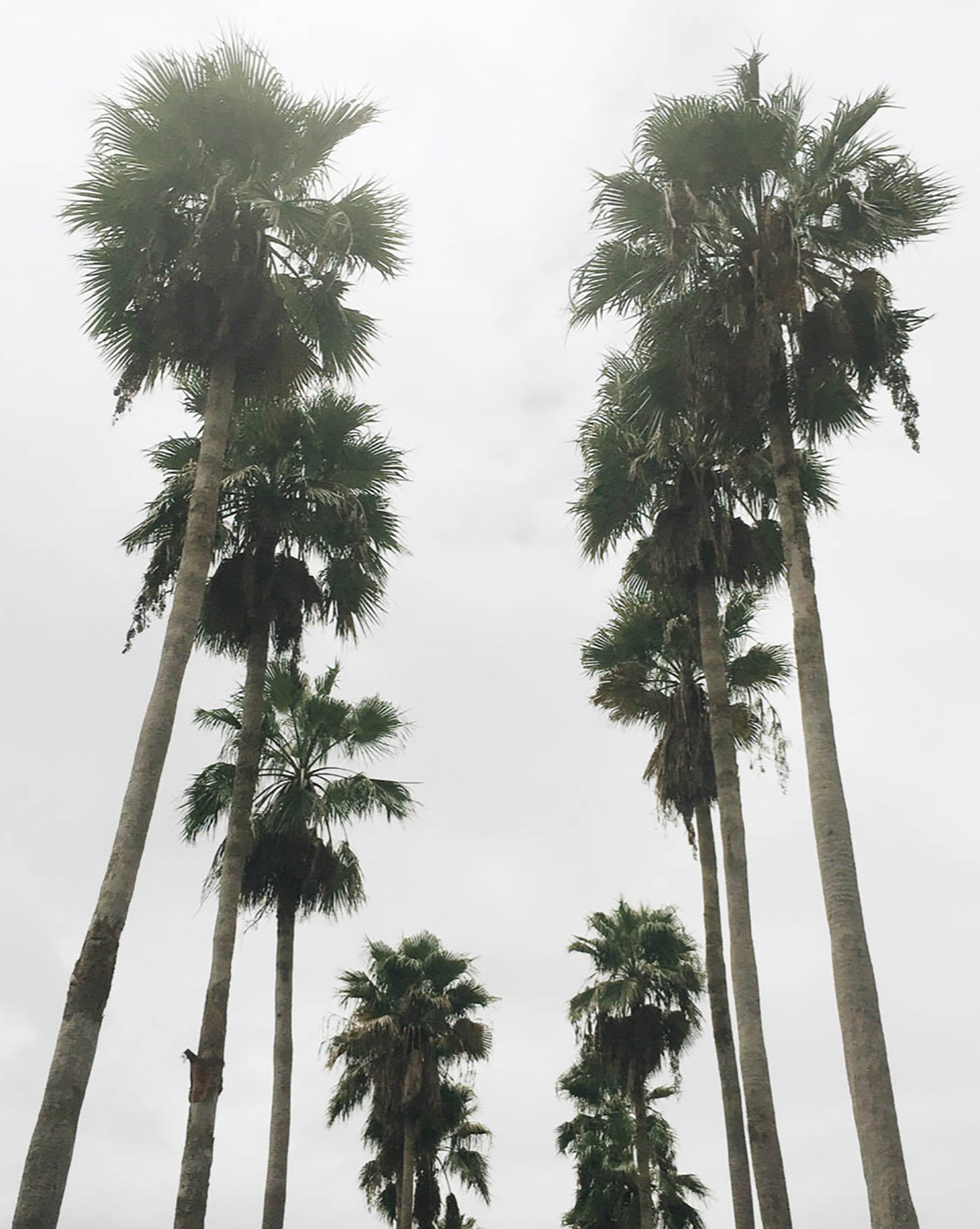 7-symmetrical-tall-palms.jpg