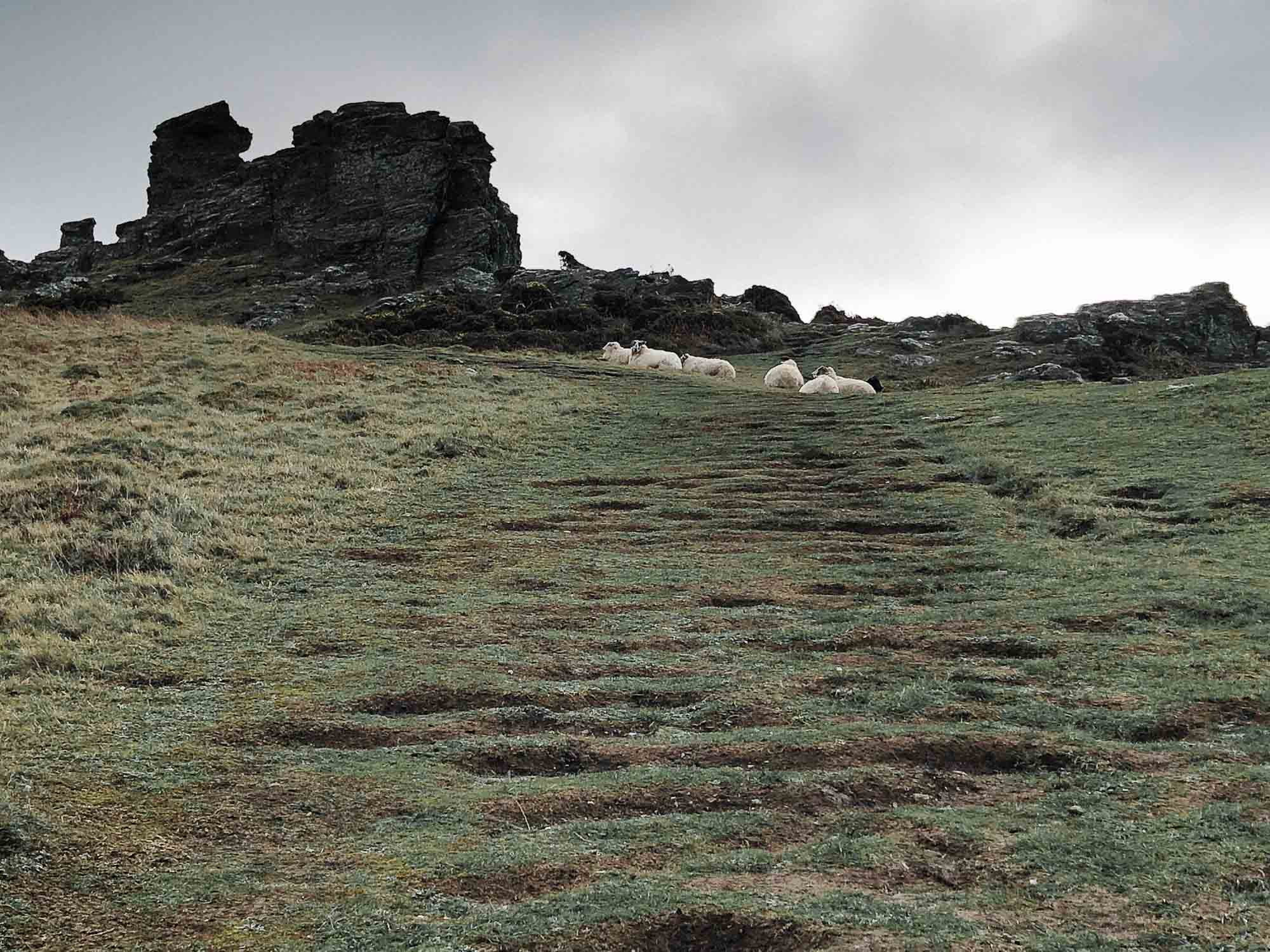 17 sheep on the hillside.jpg
