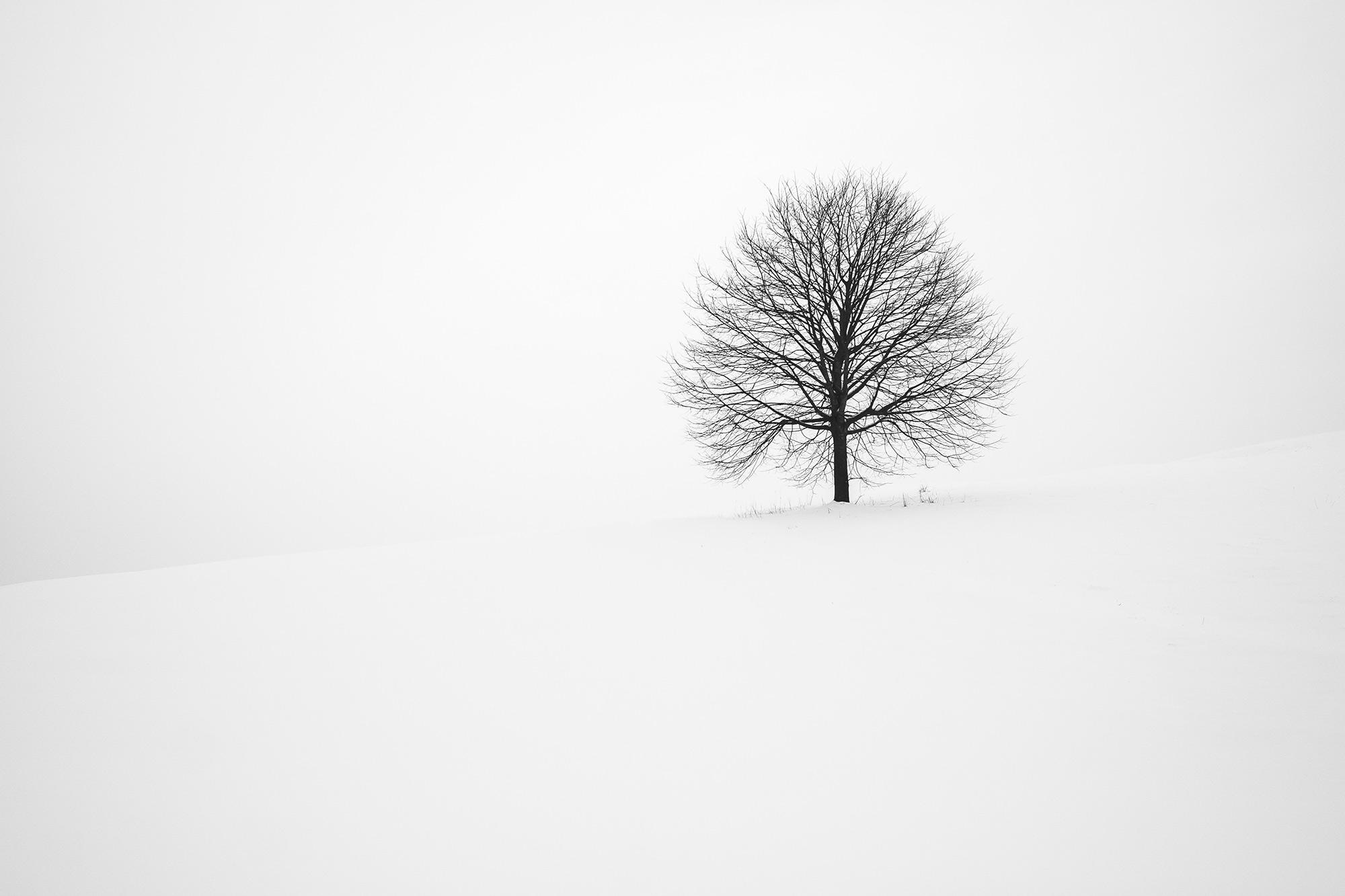 2 minimal-tree-in-snow-unsplash-photo.jpg