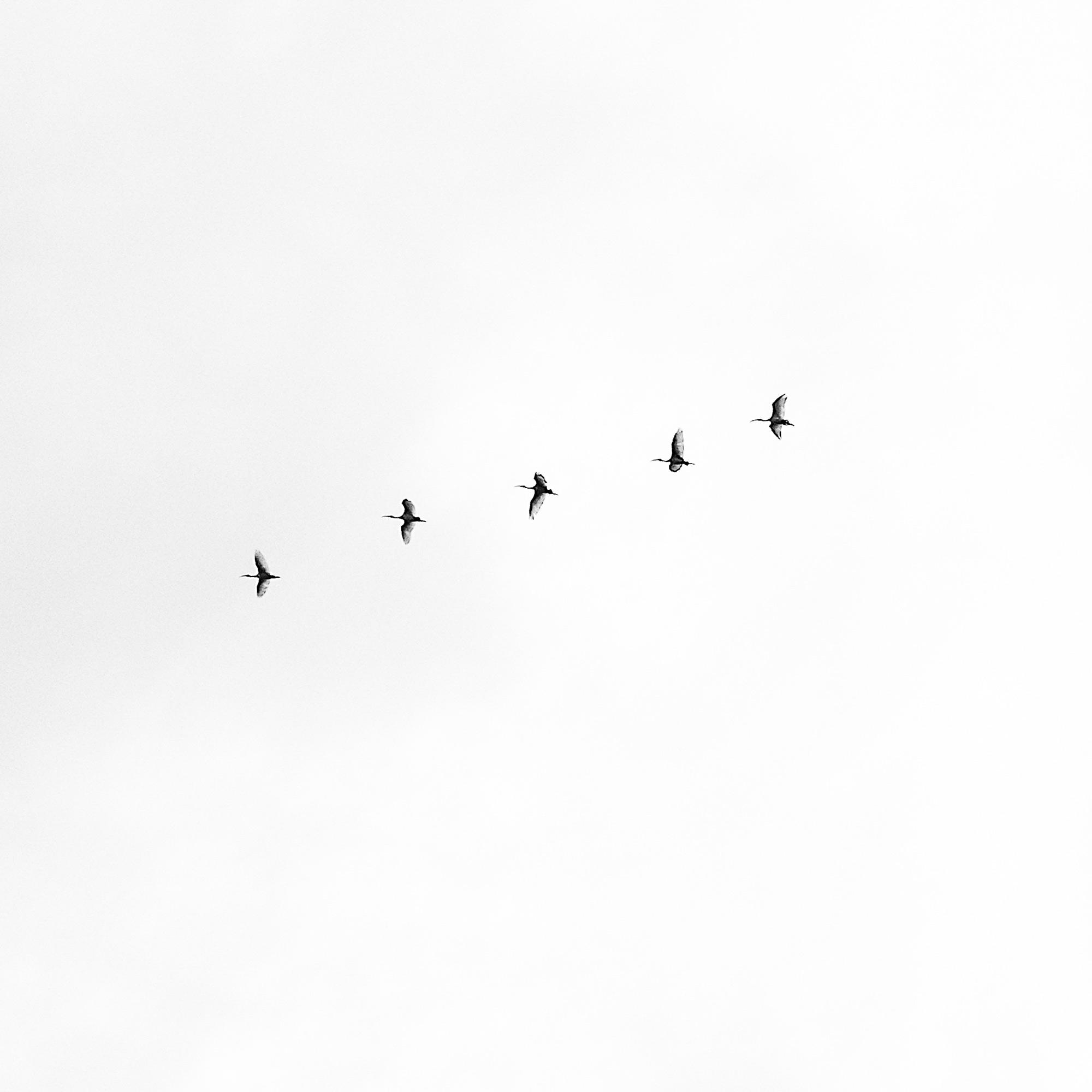 4 minimal-unsplash-photo-birds-in-flight.jpg
