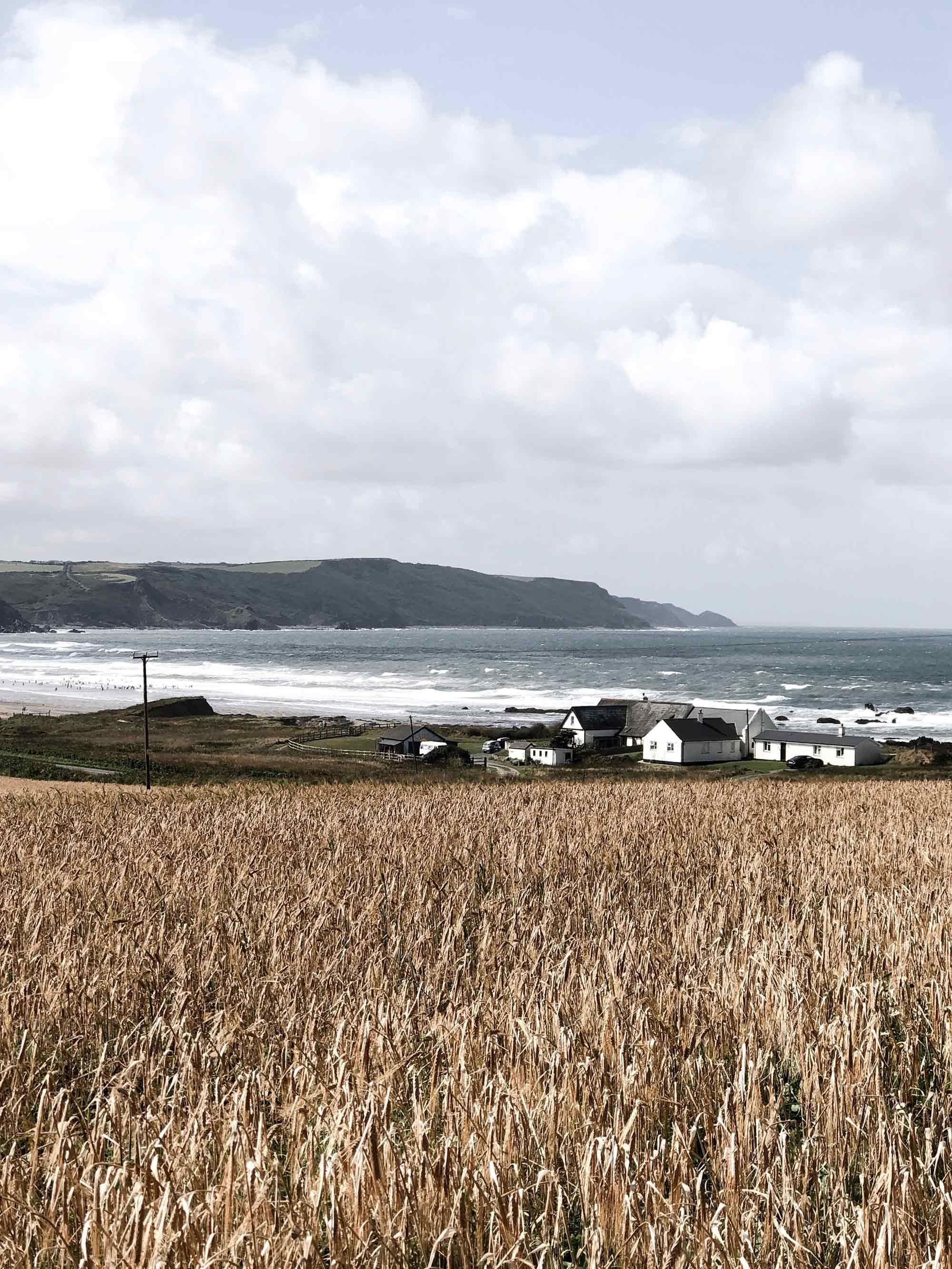 2 corn-fields-on-North-Atlantic-coast-of-cornwall.jpg