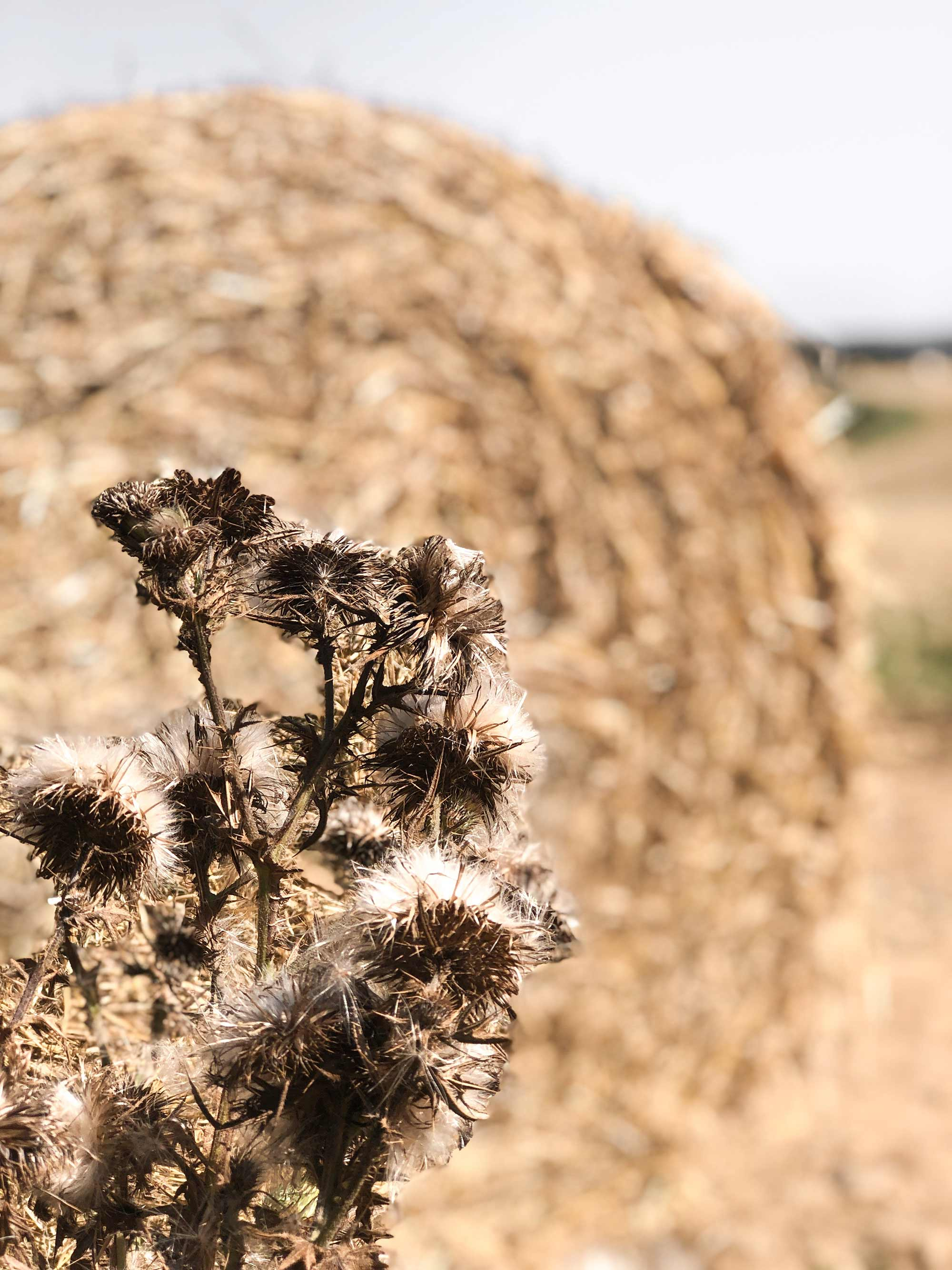 6 SBS corn-fields-at-harvest-time.jpg