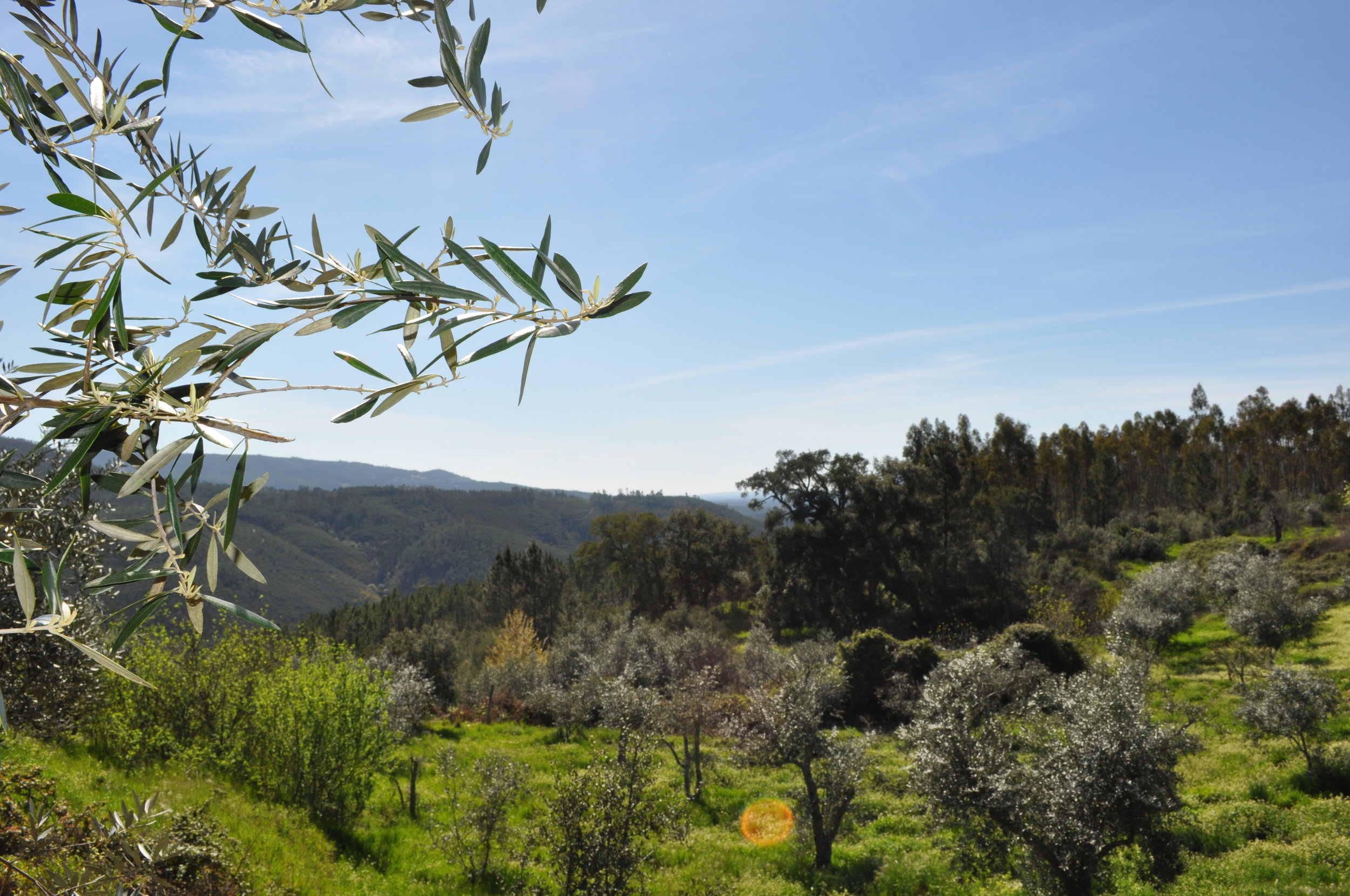 Felgueiras View.JPG