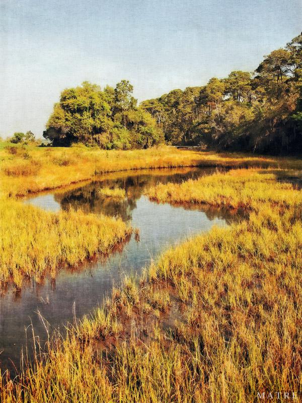 Golden Marsh | Coastal Georgia