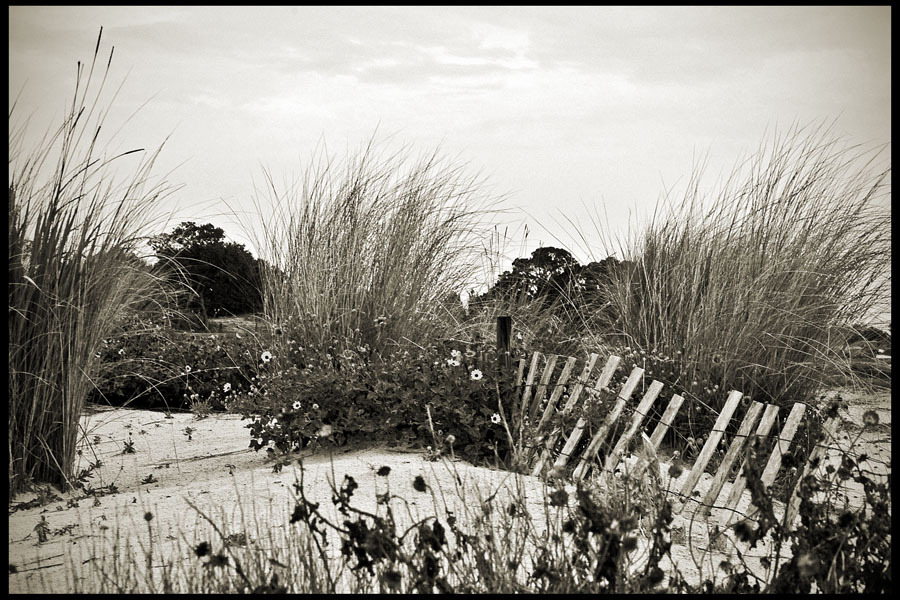 Sea Island Dunes