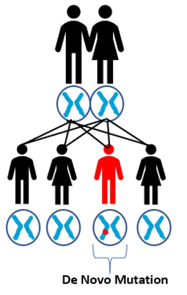 De Novo Mutation2.jpg
