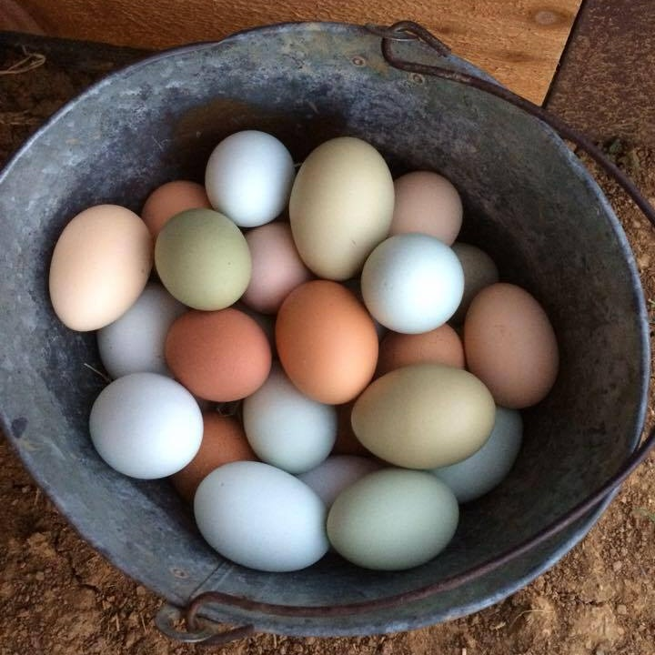 Farm Fresh Eggs - Don't you love our rainbow eggs? Last Summer we sold off most of our chicken flock and kept only about twenty hens to provide free range eggs for our family. At this time we are no longer selling eggs to our friends and neighbors.