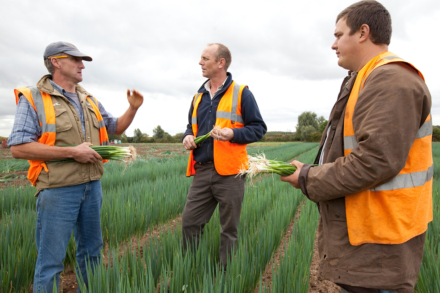 Ely growers field studies of onion crop.