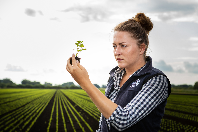 Agronomist evaluates celery production on farm in Cambridge Fens. Photo: Keith Mindham