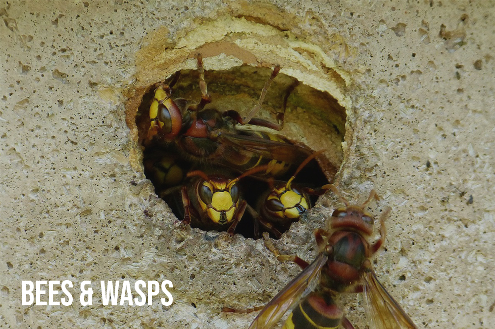 Wasp Nest Website.jpg