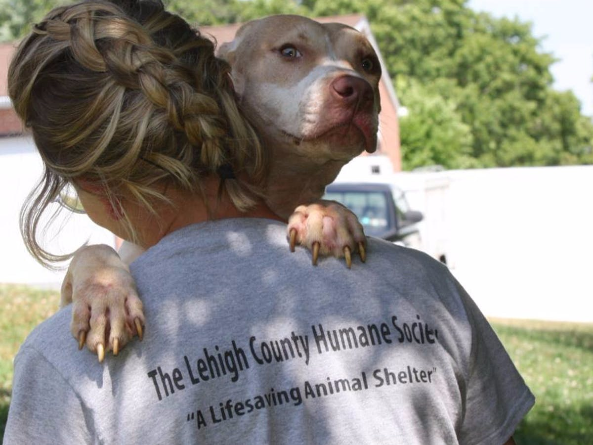 Prevent-Animal-Cruelty-with-the-Lehigh-County-Humane-Society.jpg
