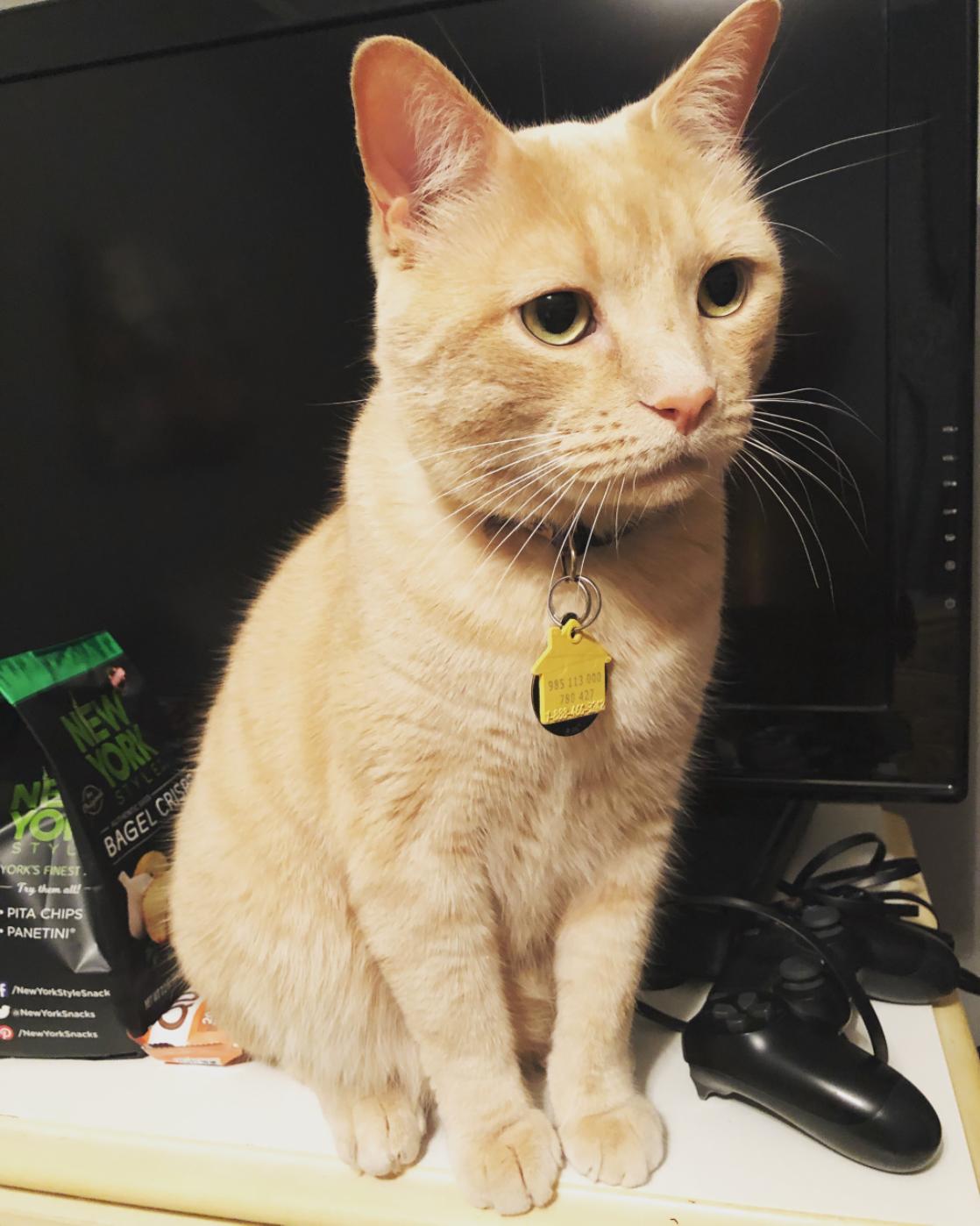 Lorenzo - Cat# 1  (4 Votes)