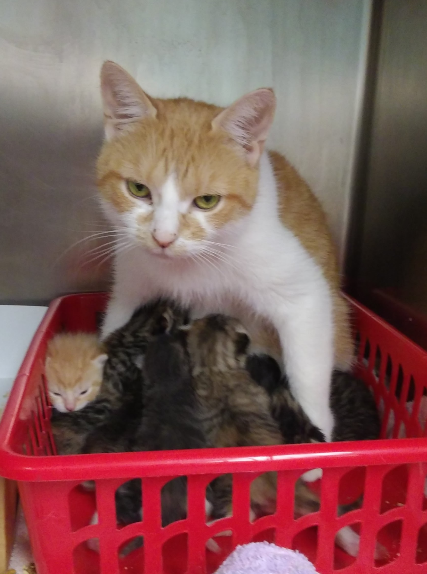 Barcelona & Kittens - Cat# 5